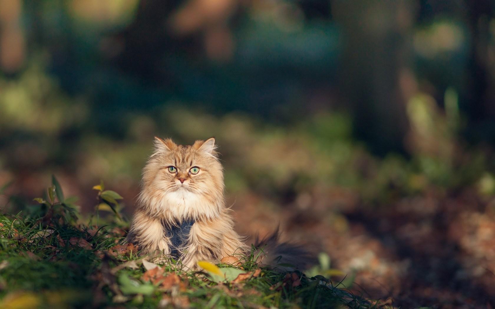 Fluffy Kitten Nature HD Wallpaper