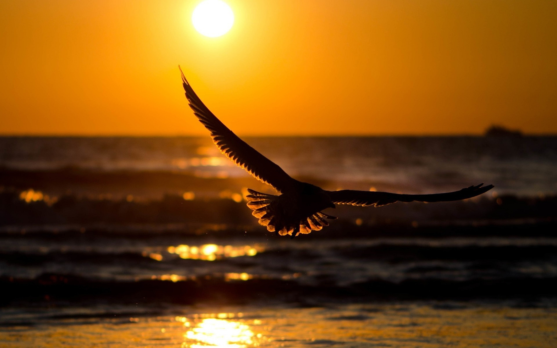 Flying bird in sunset