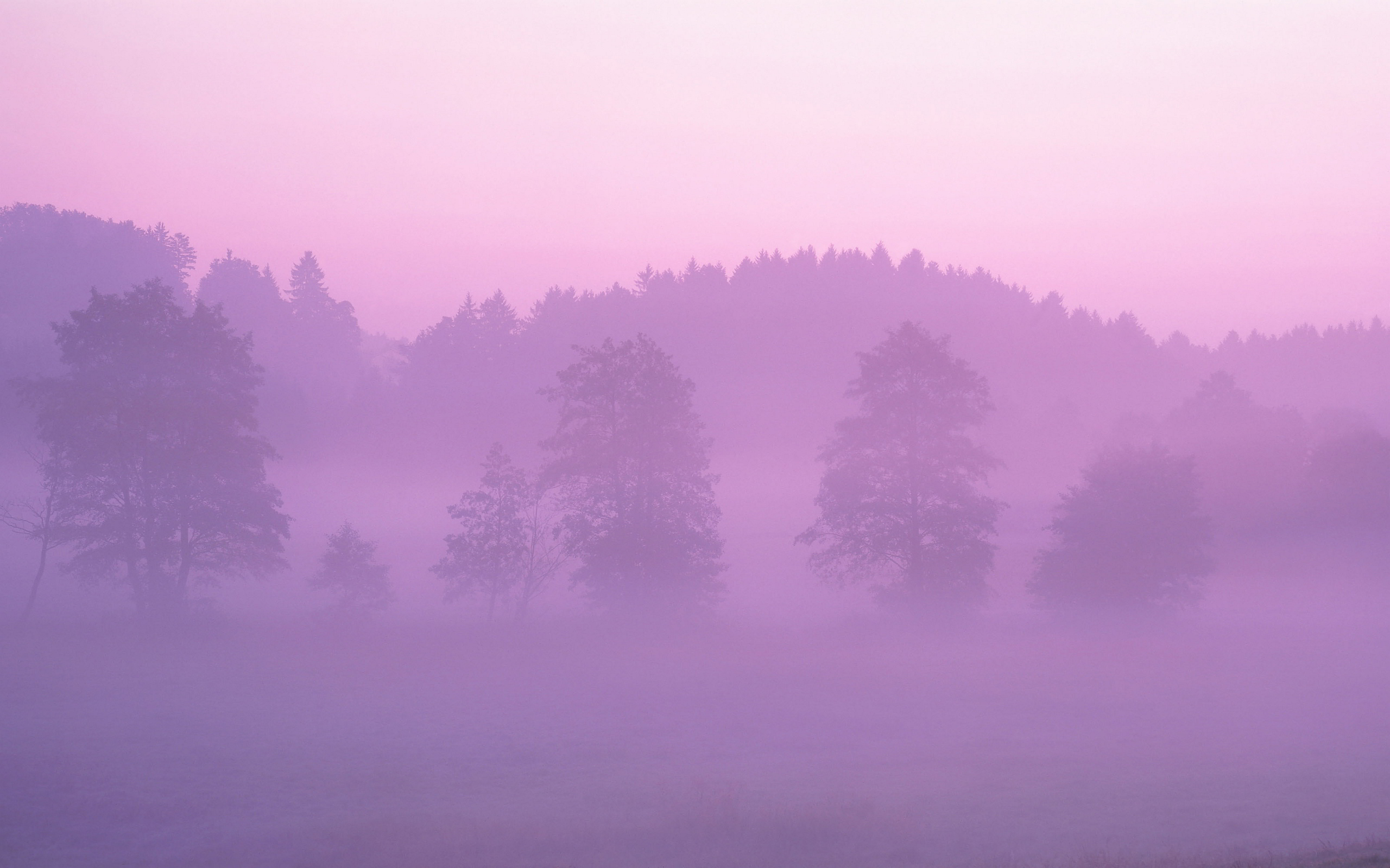 Pink Early Morning Fog