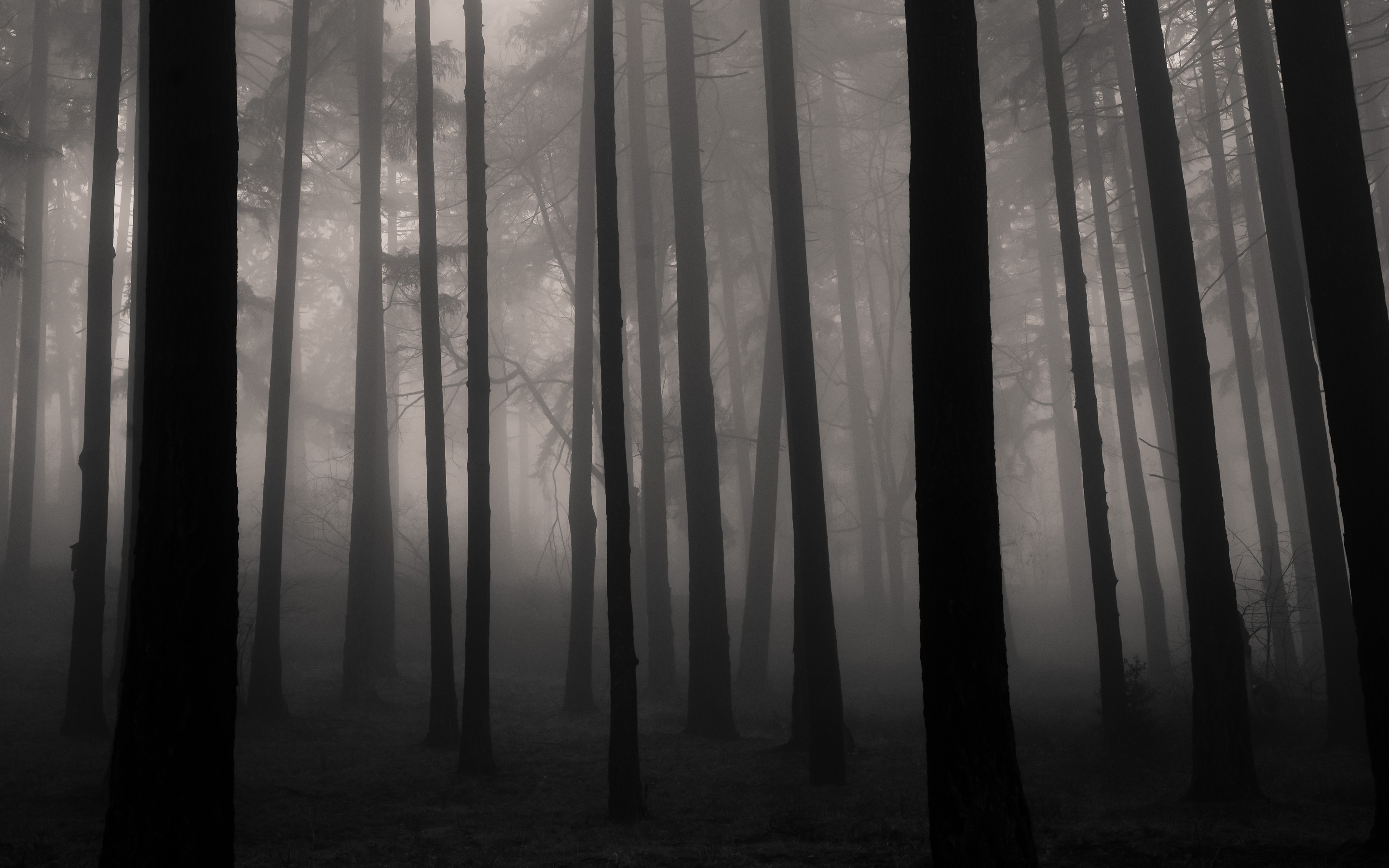 Fog in the Forest by Traveling Julie