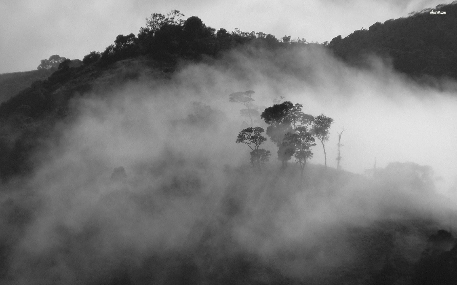 ... Fog wallpaper 1920x1200 ...