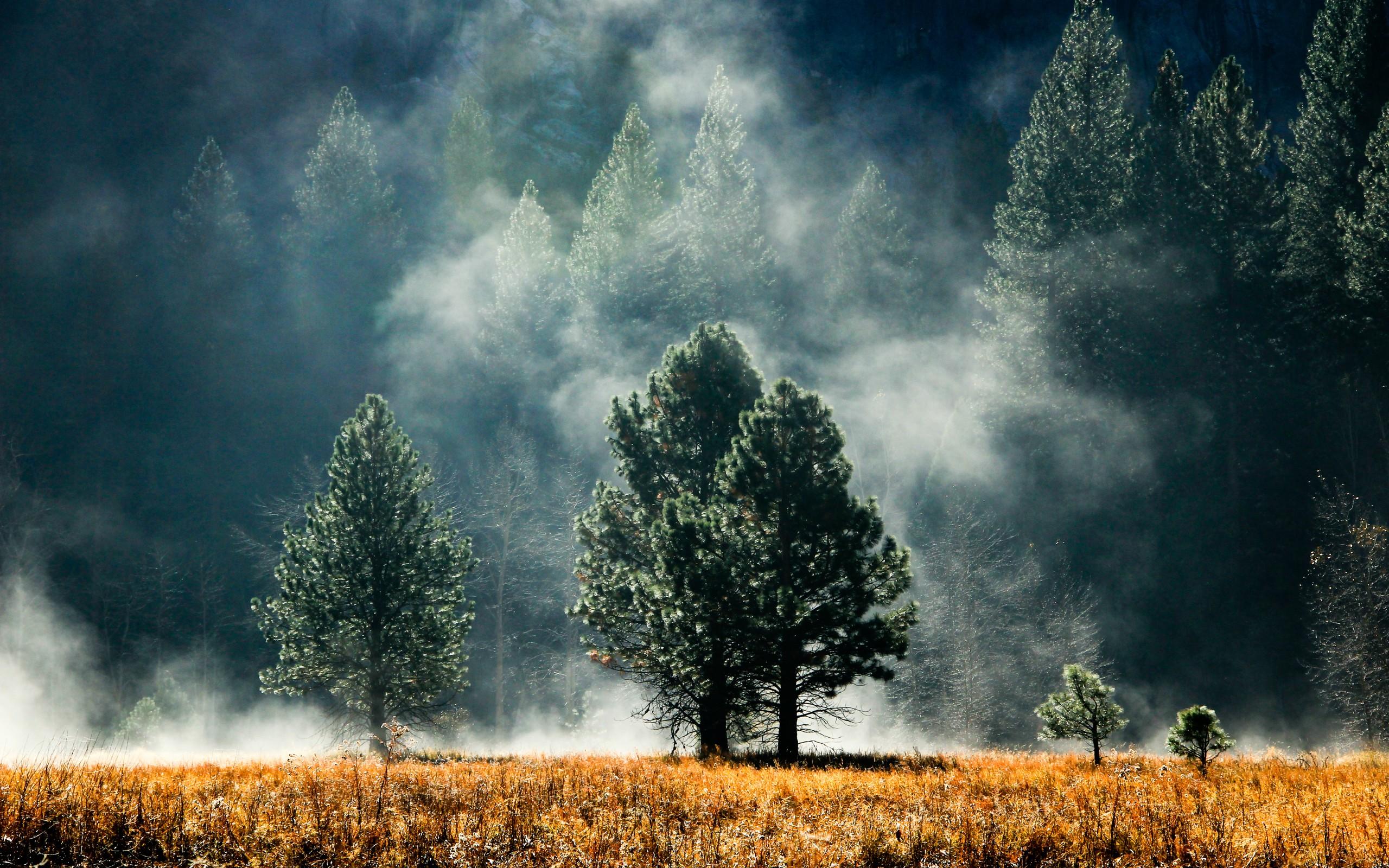 Fog Wallpaper HD 36614 2560x1600 px