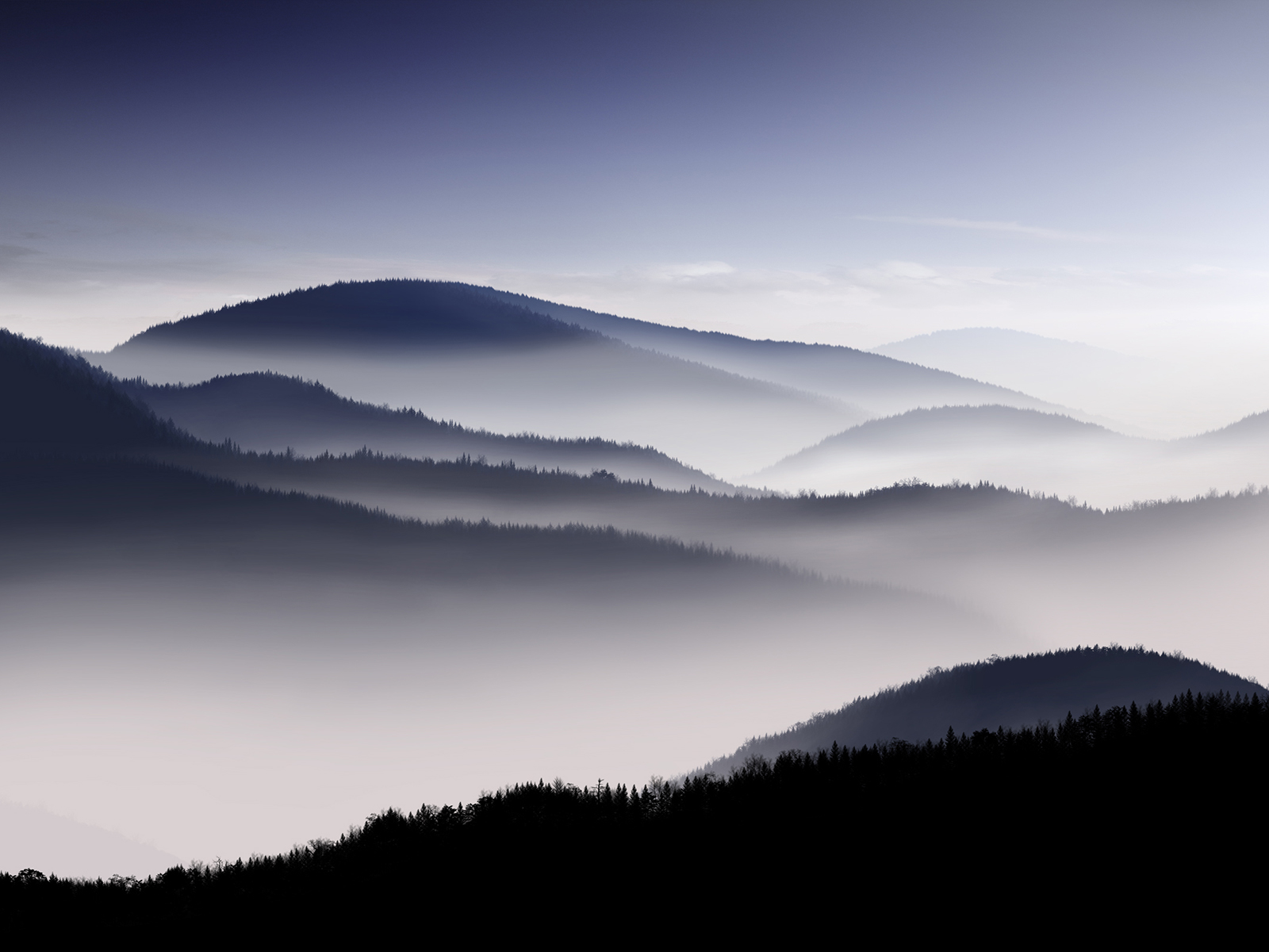 Fog Wallpaper