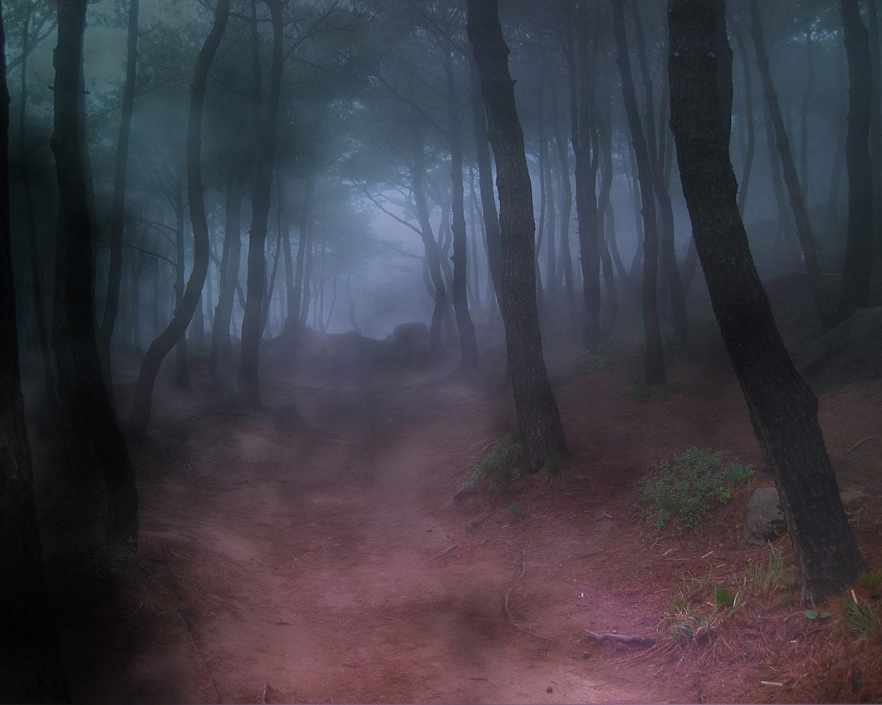 Forest Fog Best Desktop Backgrounds