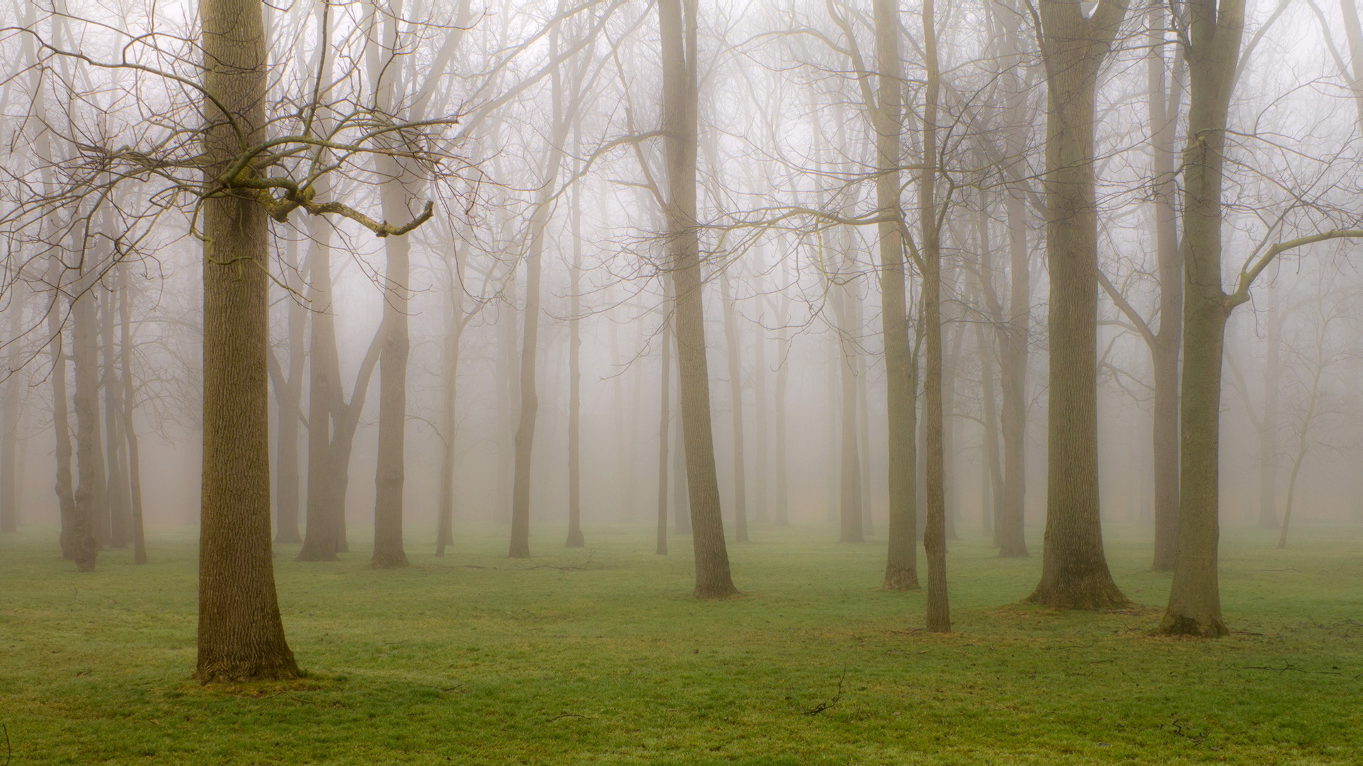 Forest Fog Wallpaper for iPhone
