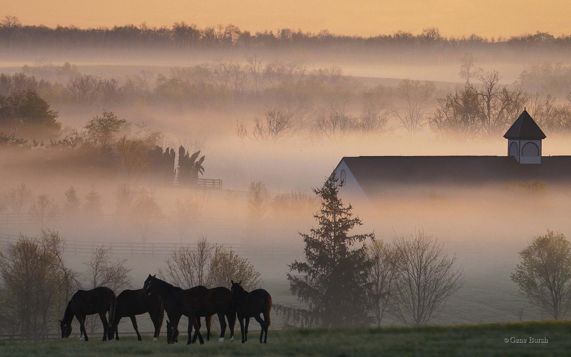 1920x1200 Foggy horsefarm