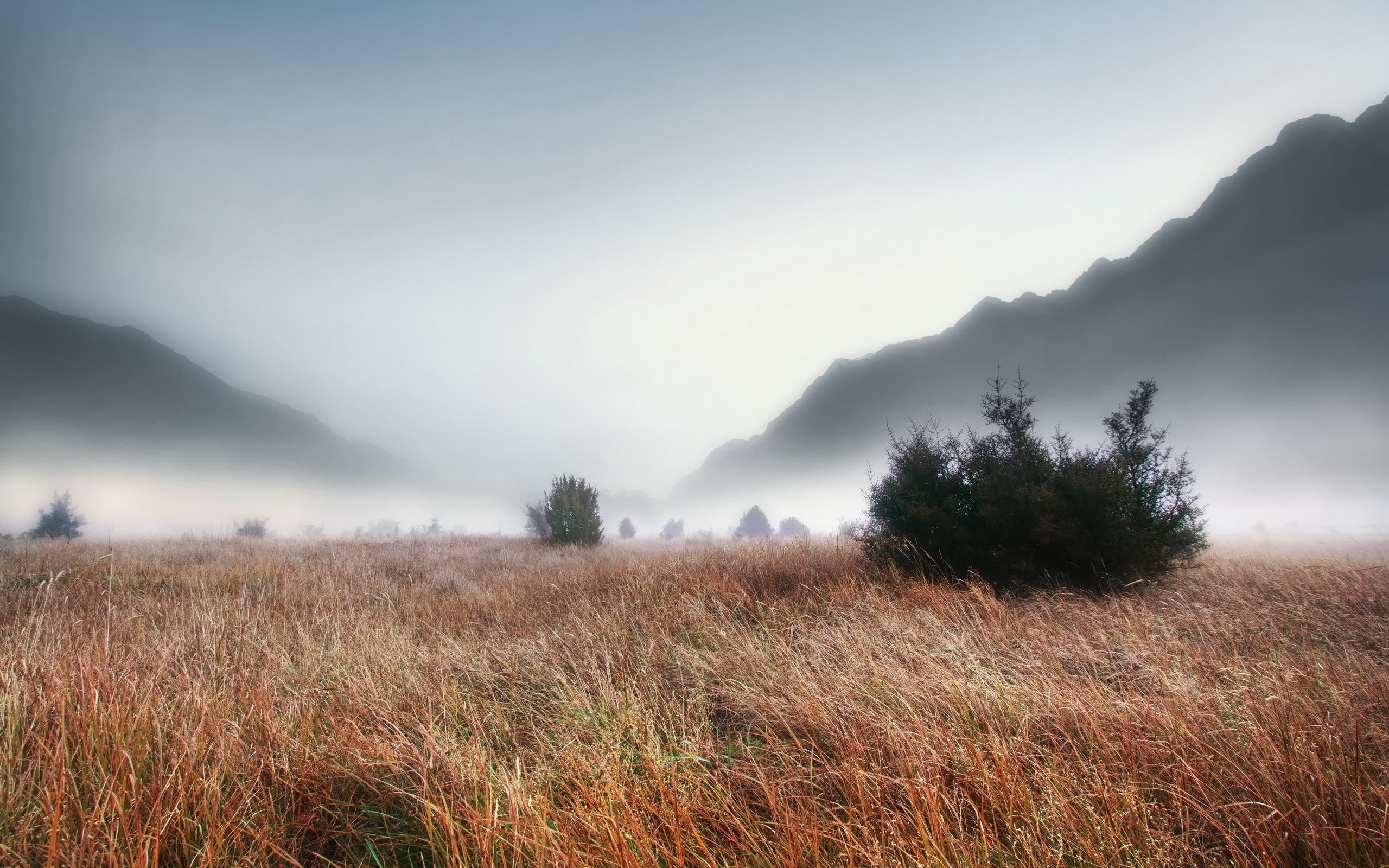 Foggy grass landscape wallpaper 2560x1600 30129 for Grass landscape