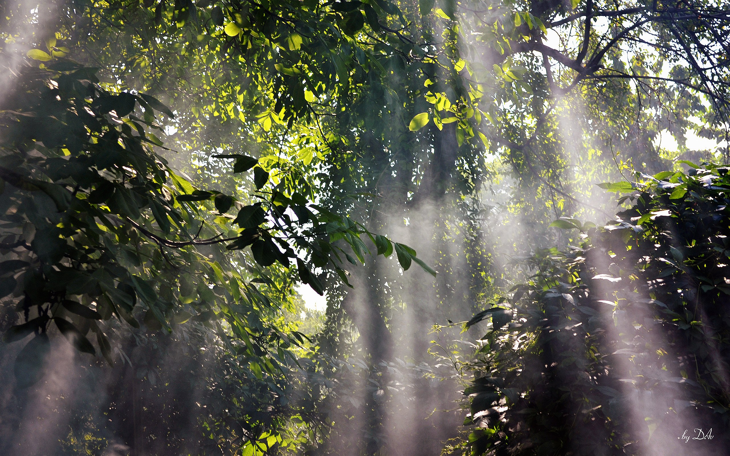 Foggy Rainforest