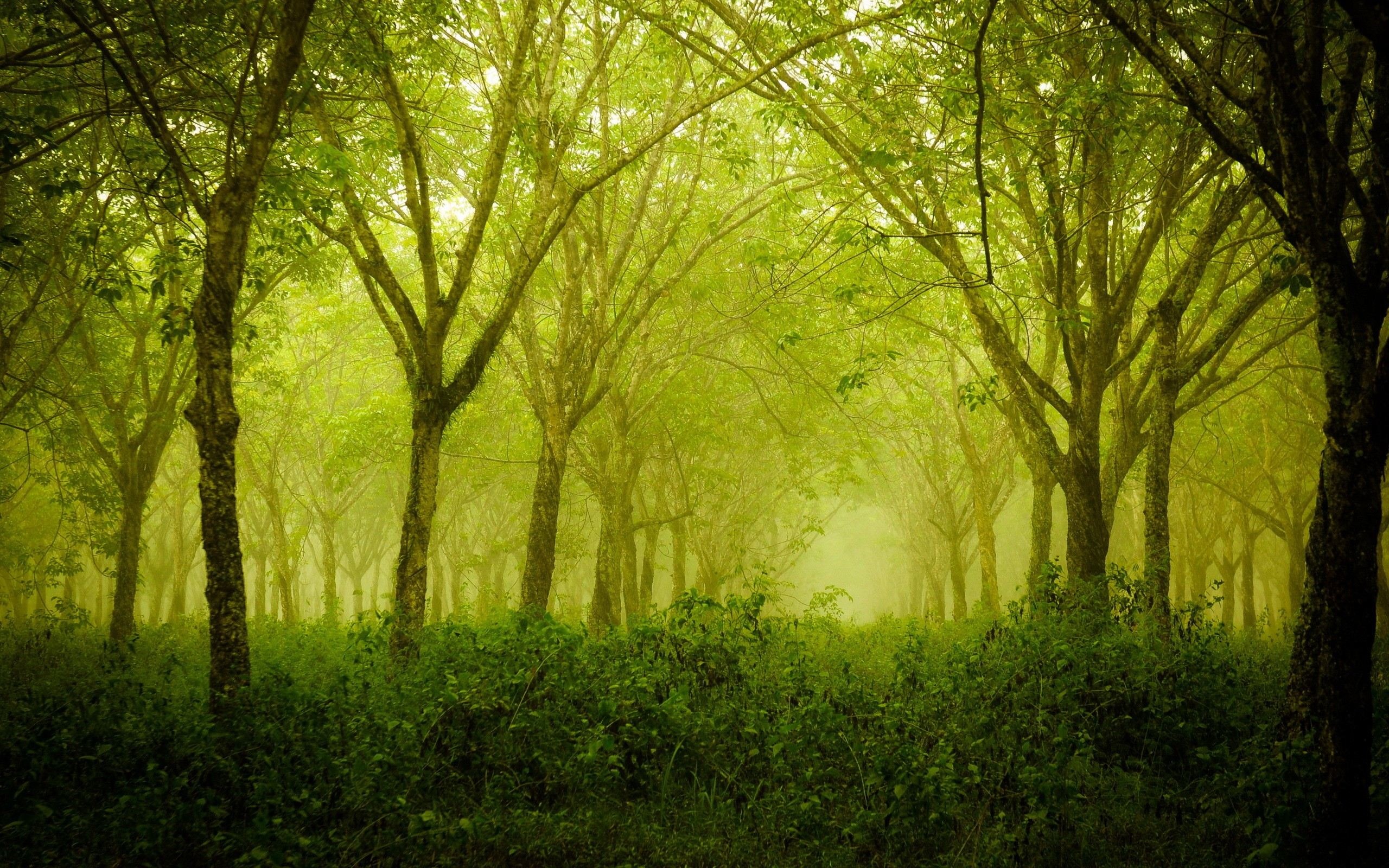 Foggy thick forest