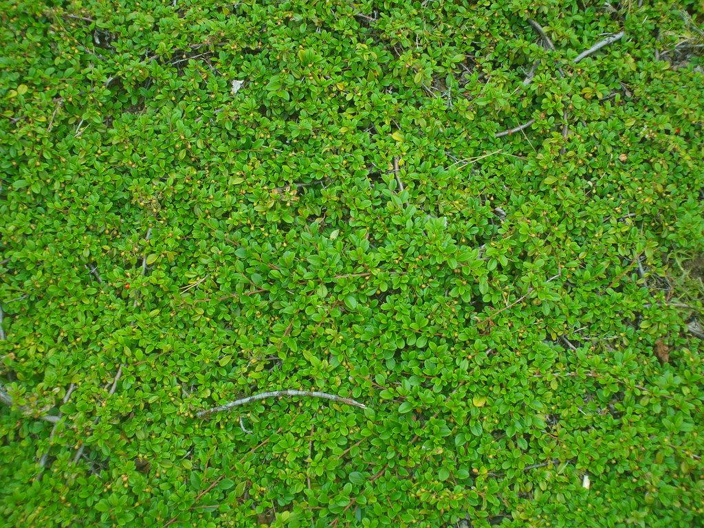Foliage 35457 1920x1200 px