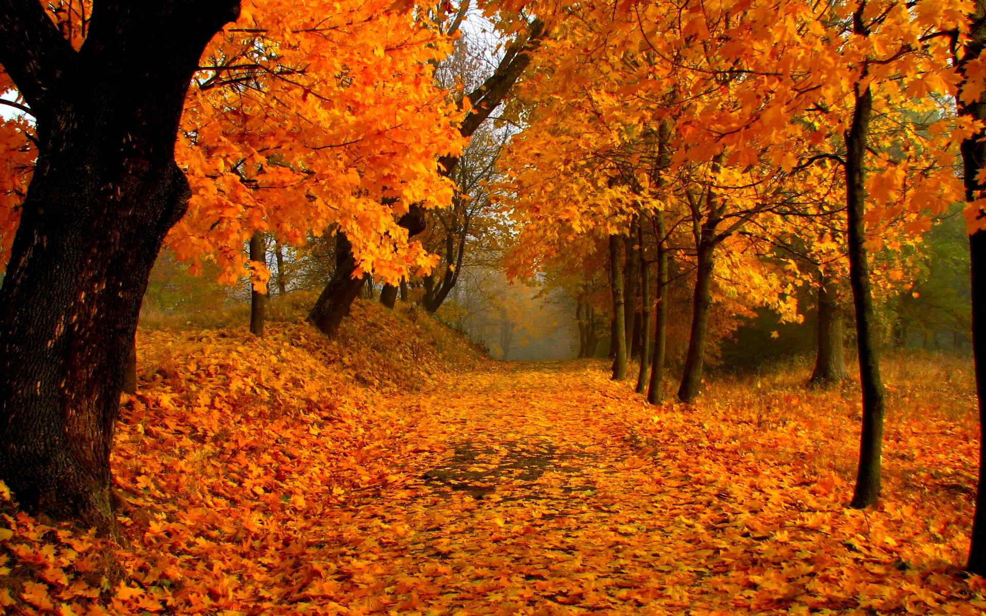 Foliage HD