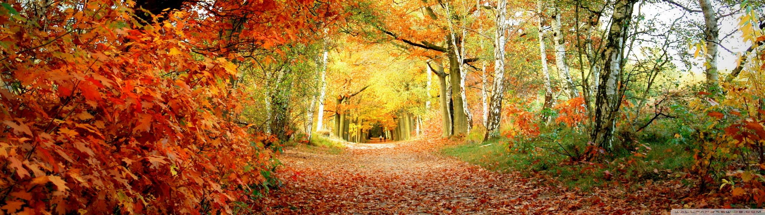Foliage Wallpaper 35458 1920x1080 px