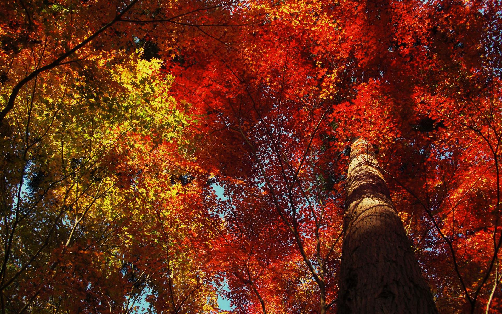 Beautiful Foliage Wallpaper