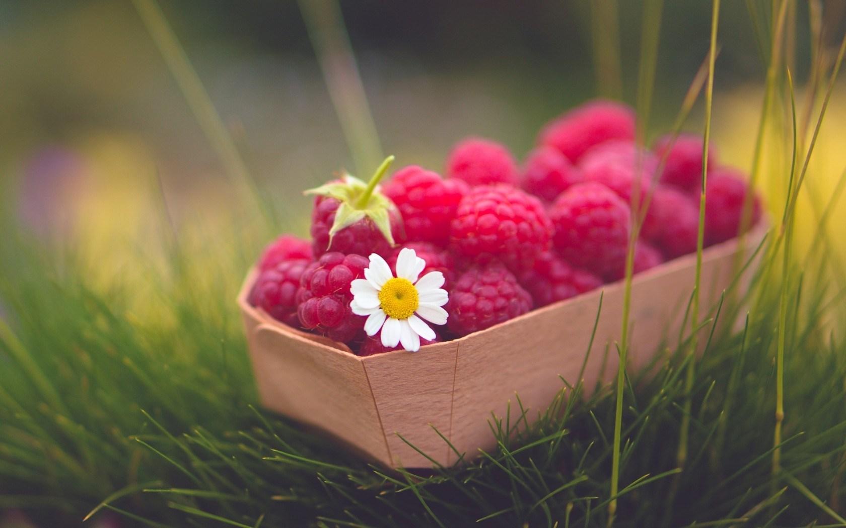 Food Raspberries Berry Daisy Flower Grass Nature