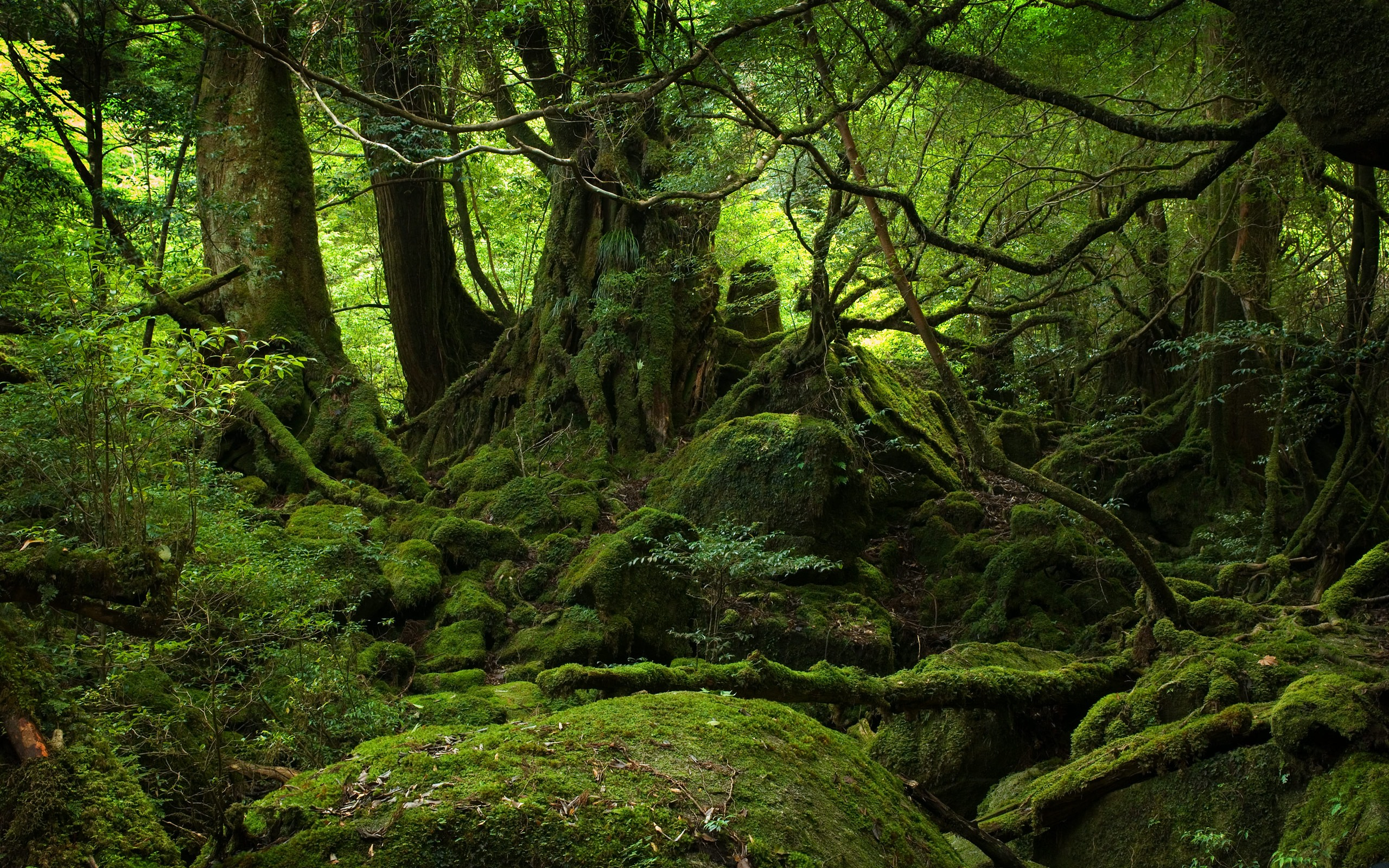Dark Green Forest Wallpaper (1)