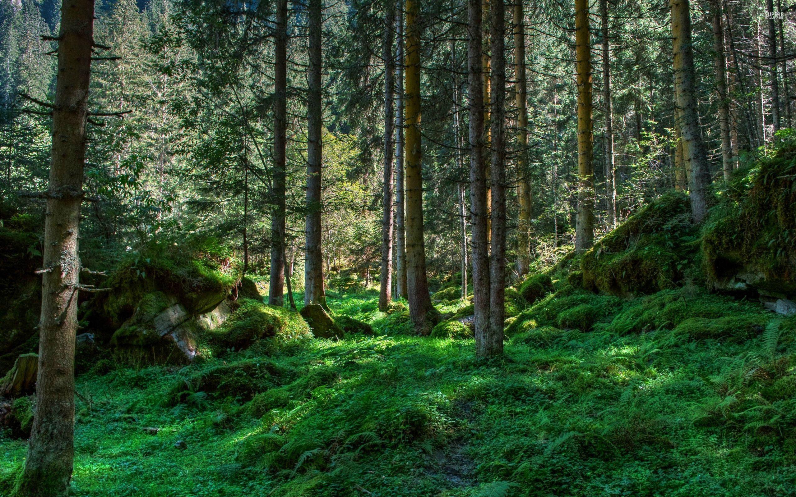Download Spring forest wallpaper