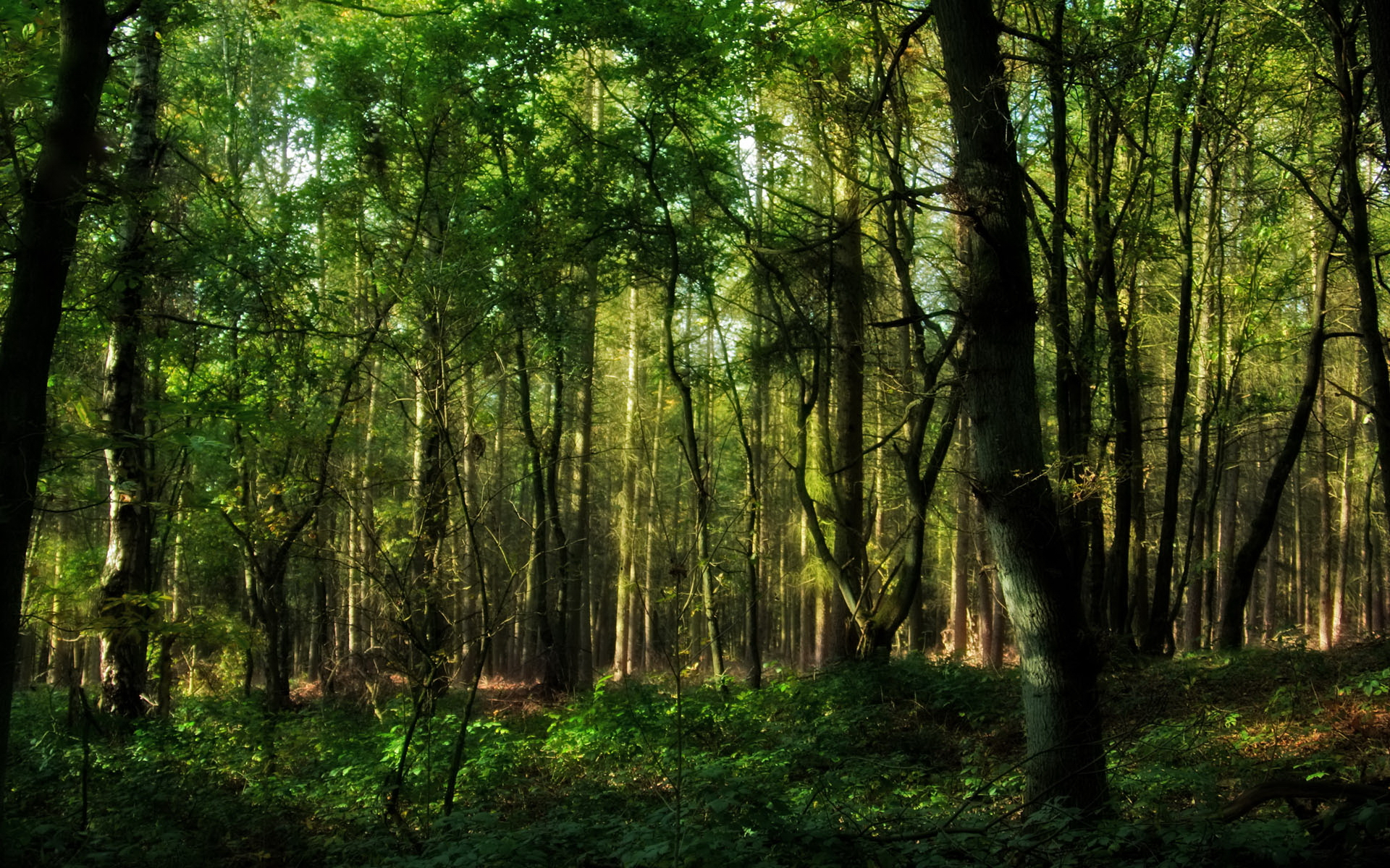 ... In the forest ...