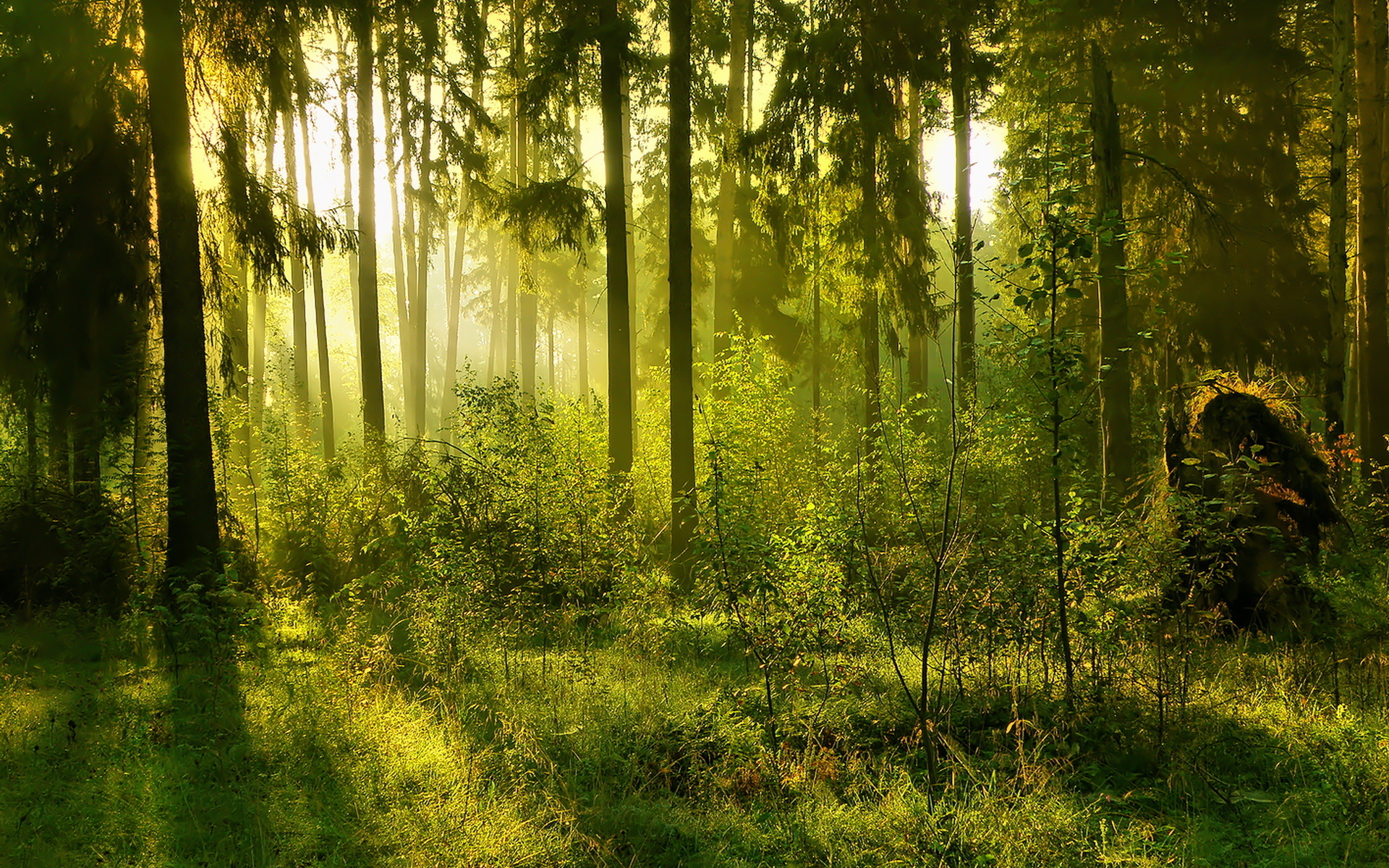 Forest Backgrounds 18578