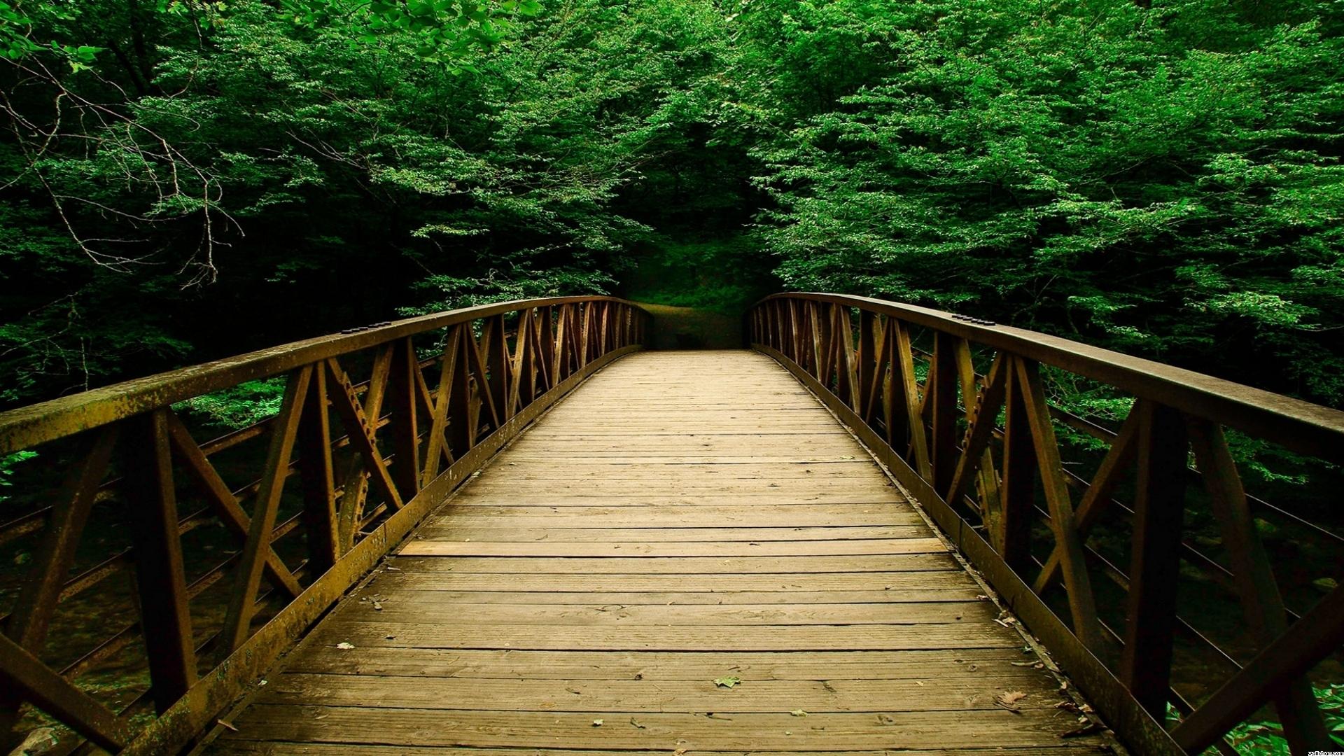 Forest Bridge Background