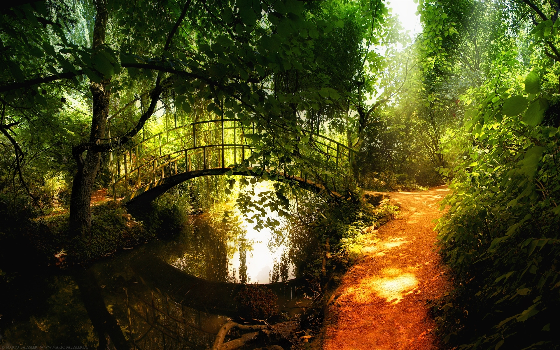 Forest Bridge Wallpaper