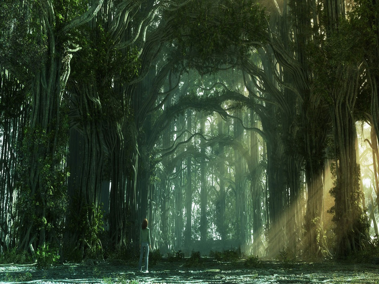 Forest Fantasy Background