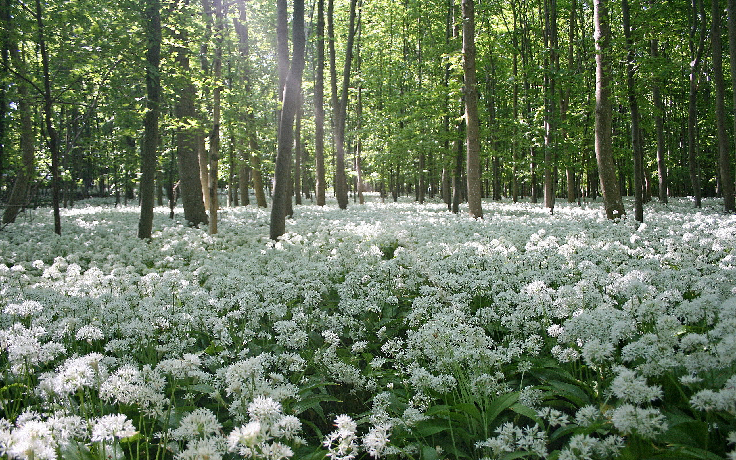 Forest Flowers Field