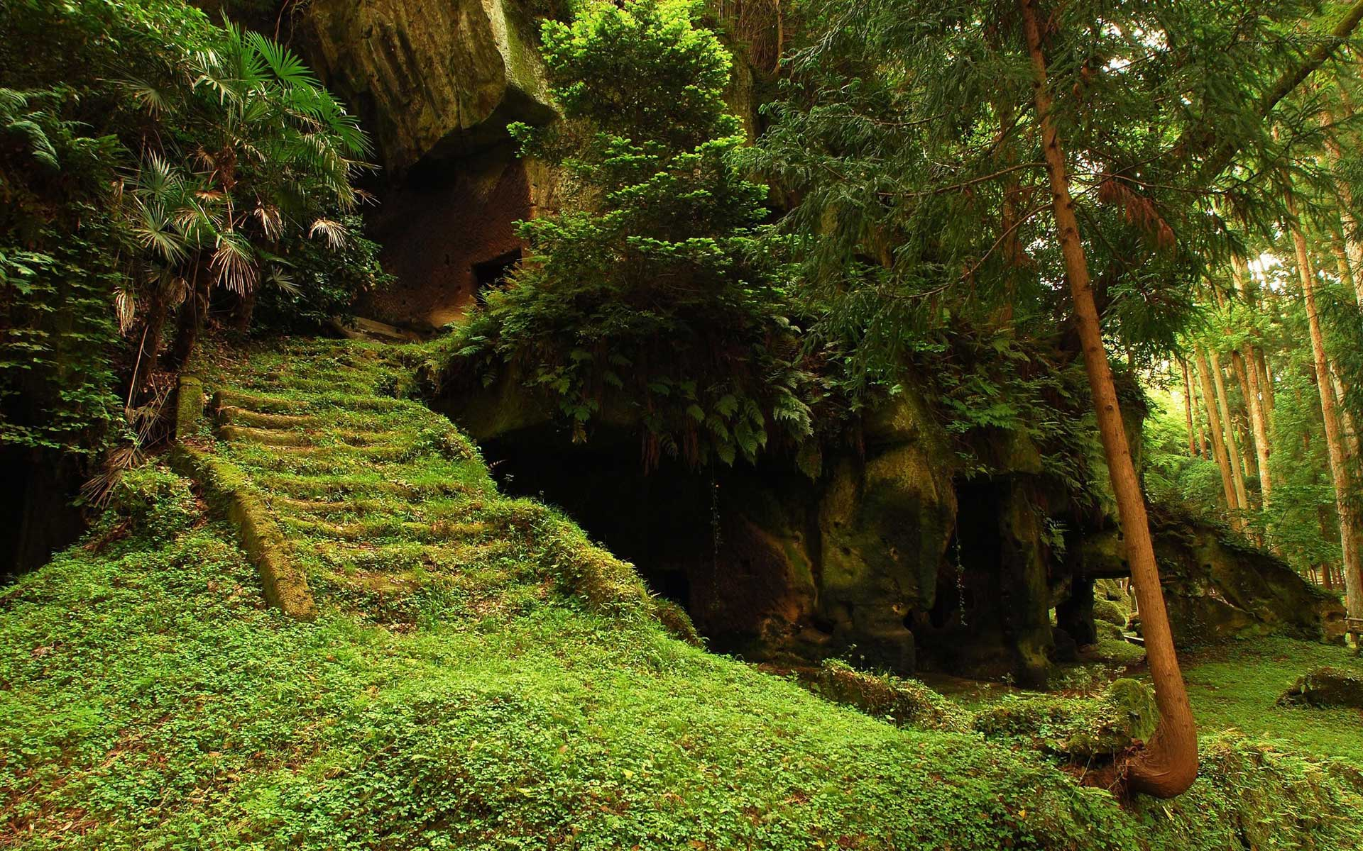 Stairs Moss Forest Wallpapers