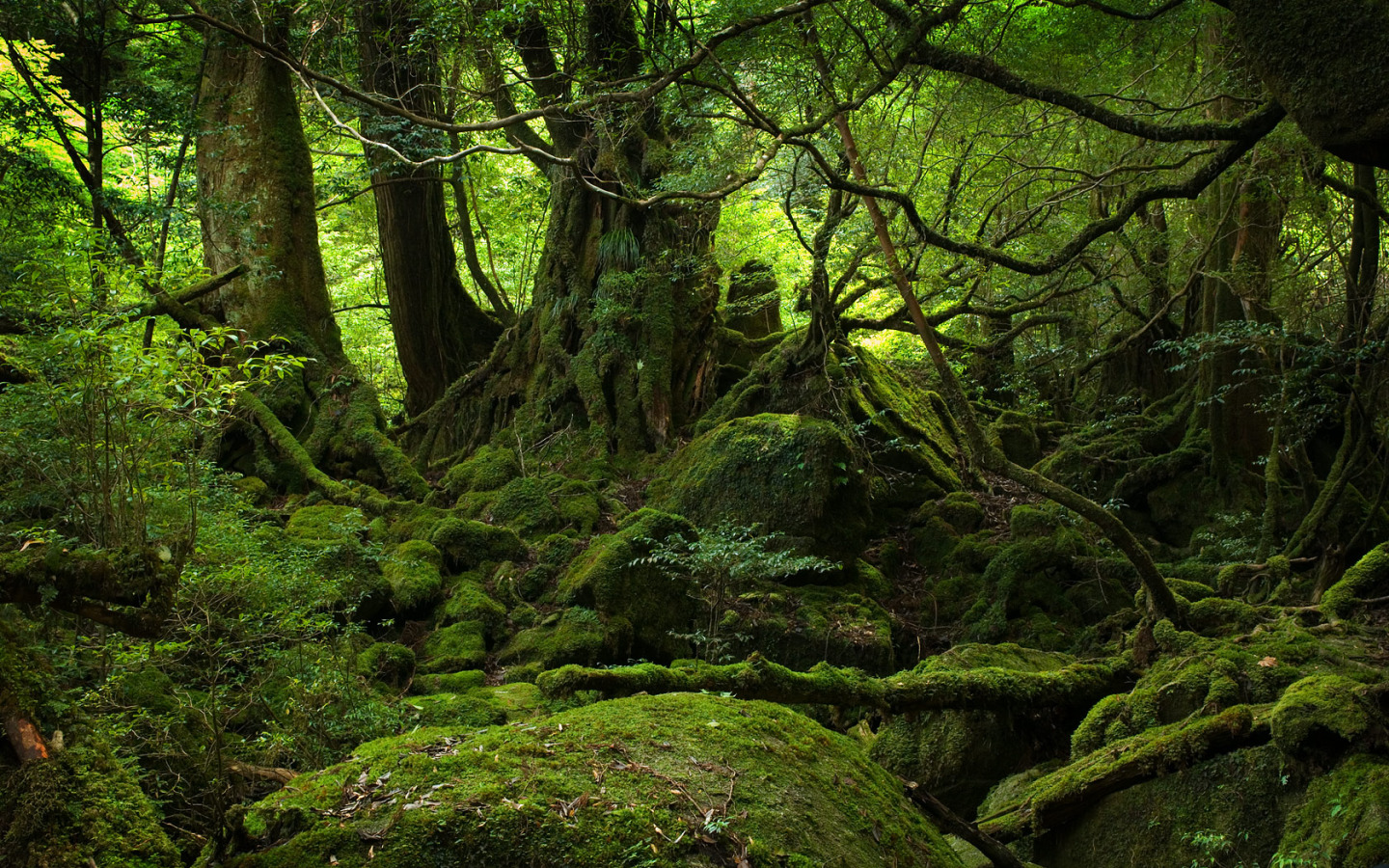 Forest Moss Wallpapers 34398 2560x1440 px