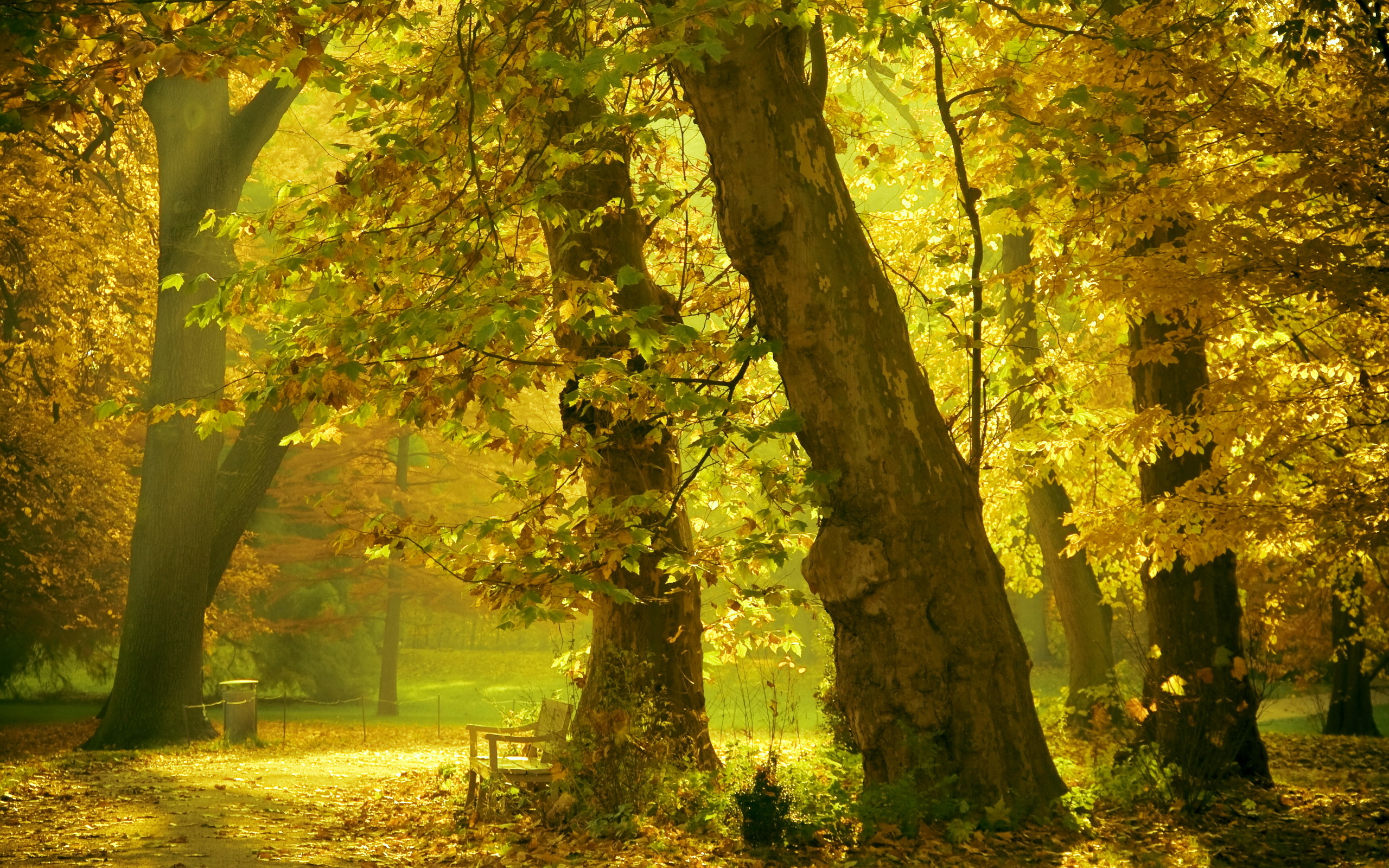 Forest park sunshine