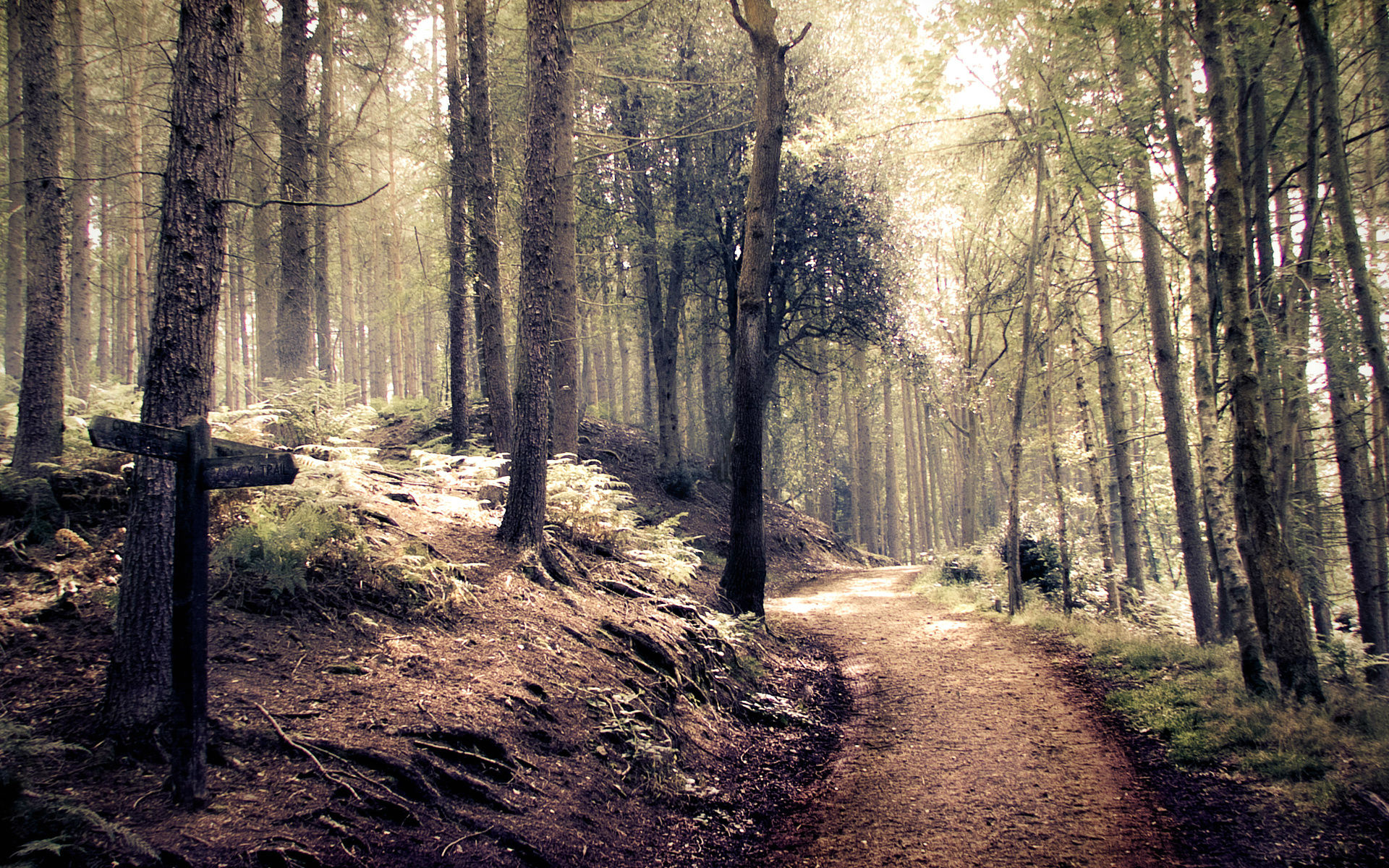 Forest Path HD Wallpapers