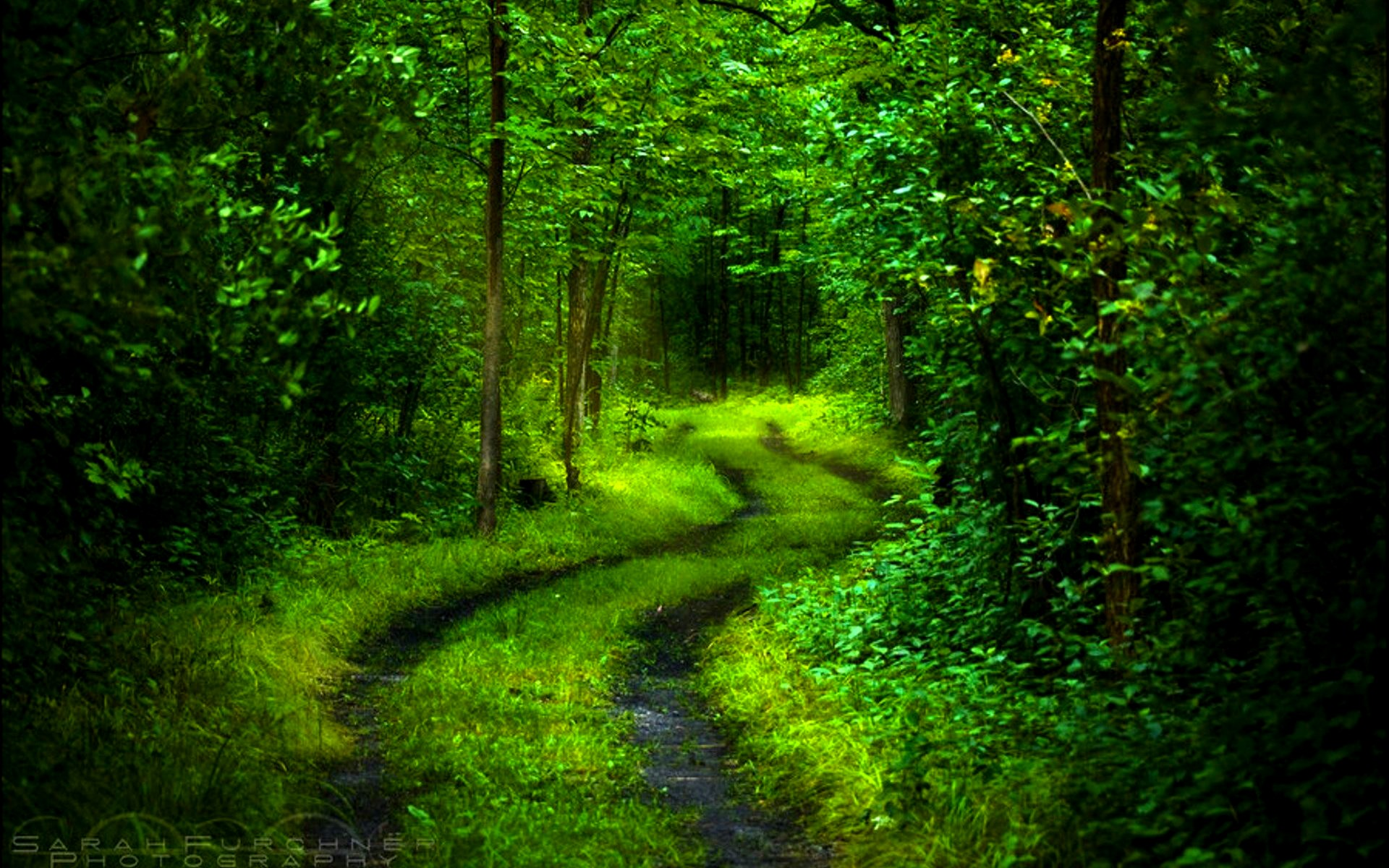 forest path nature beautiful image