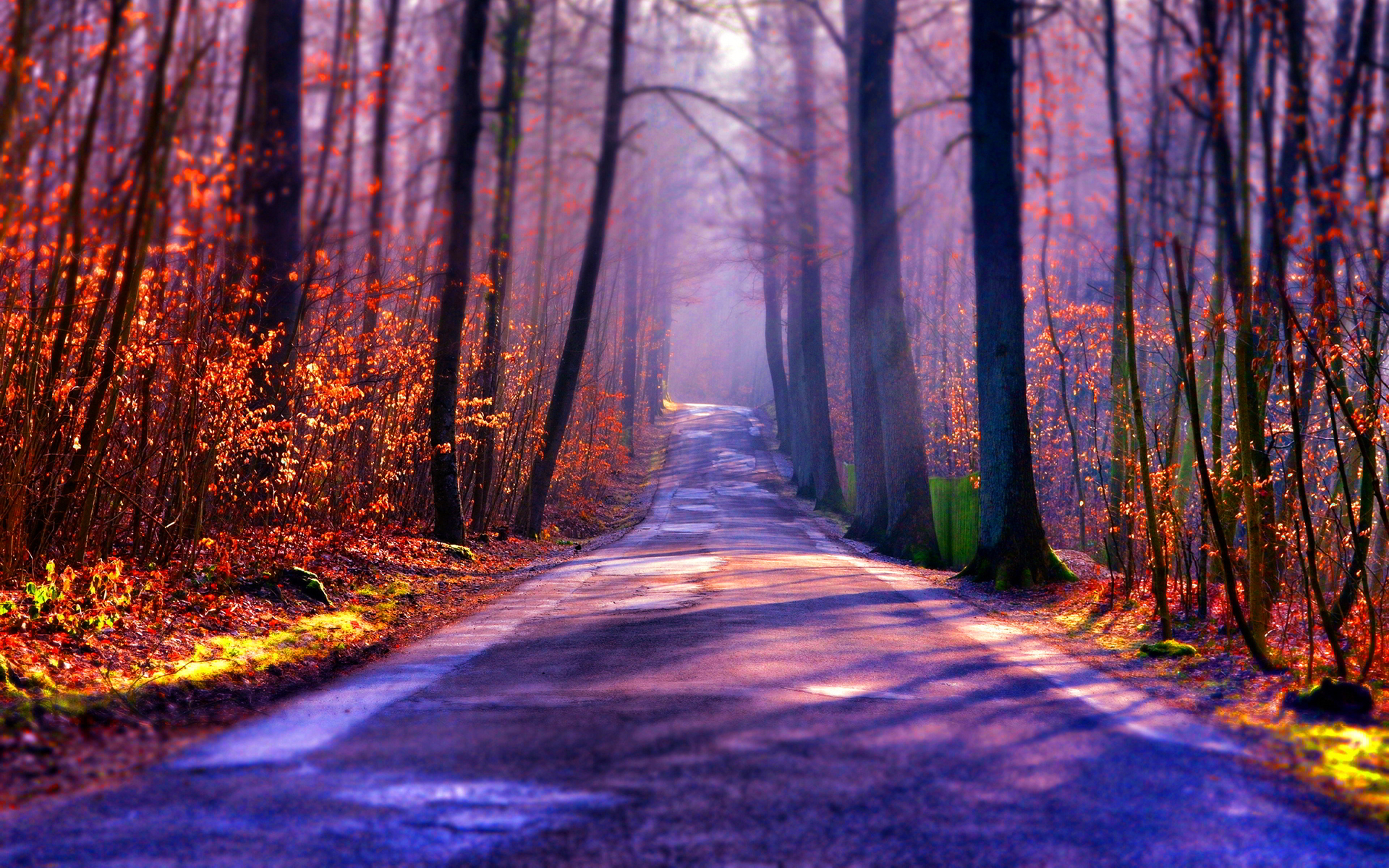 Forest road tilt shift