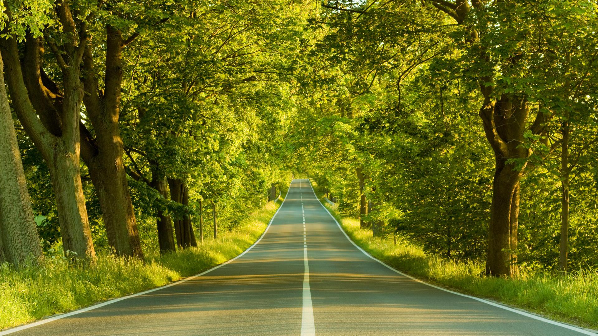Forest Road Wallpaper HD