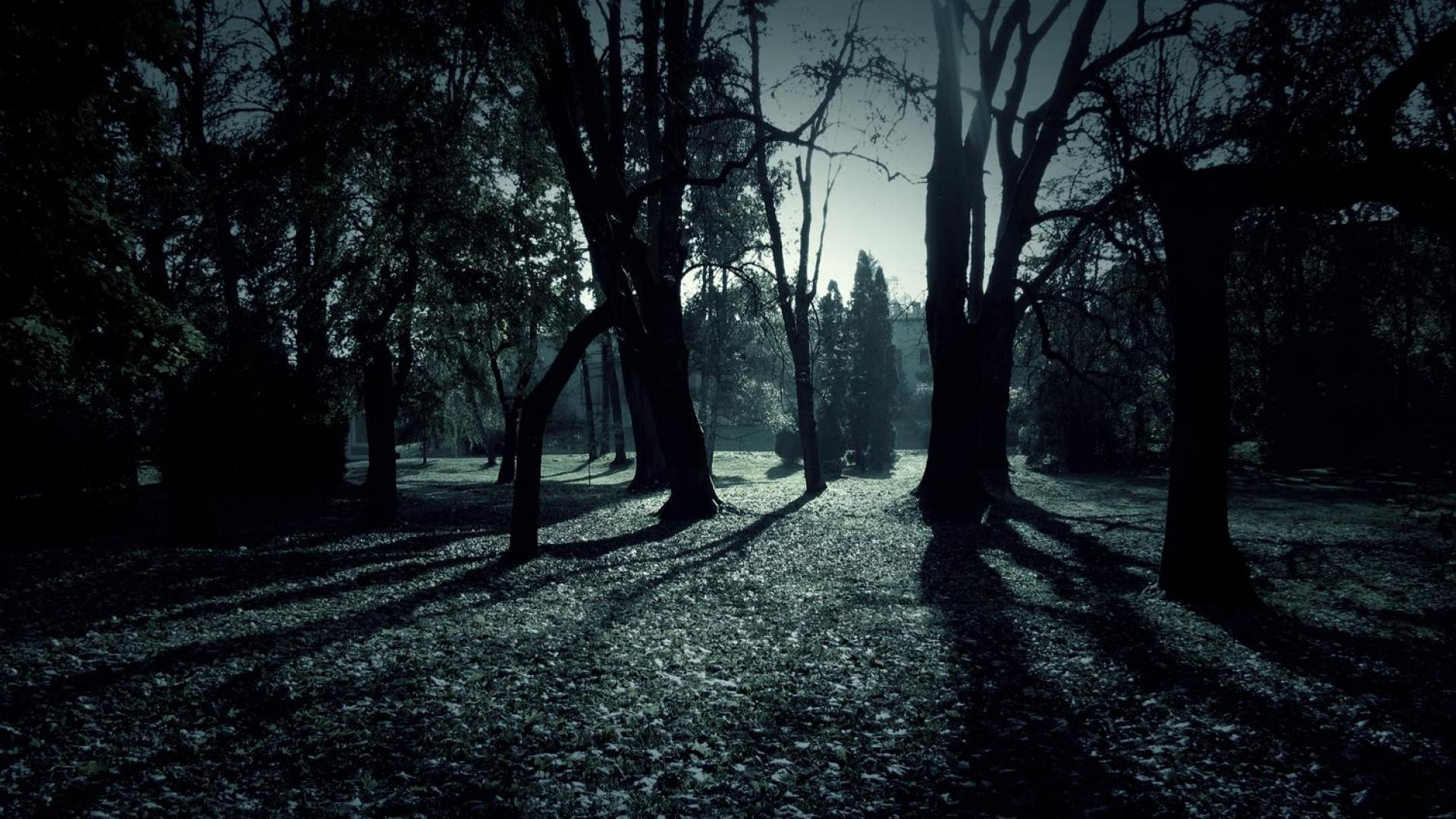 Dark Forest Shadows Hd Wallpaper Wallpapers 1920x1080px