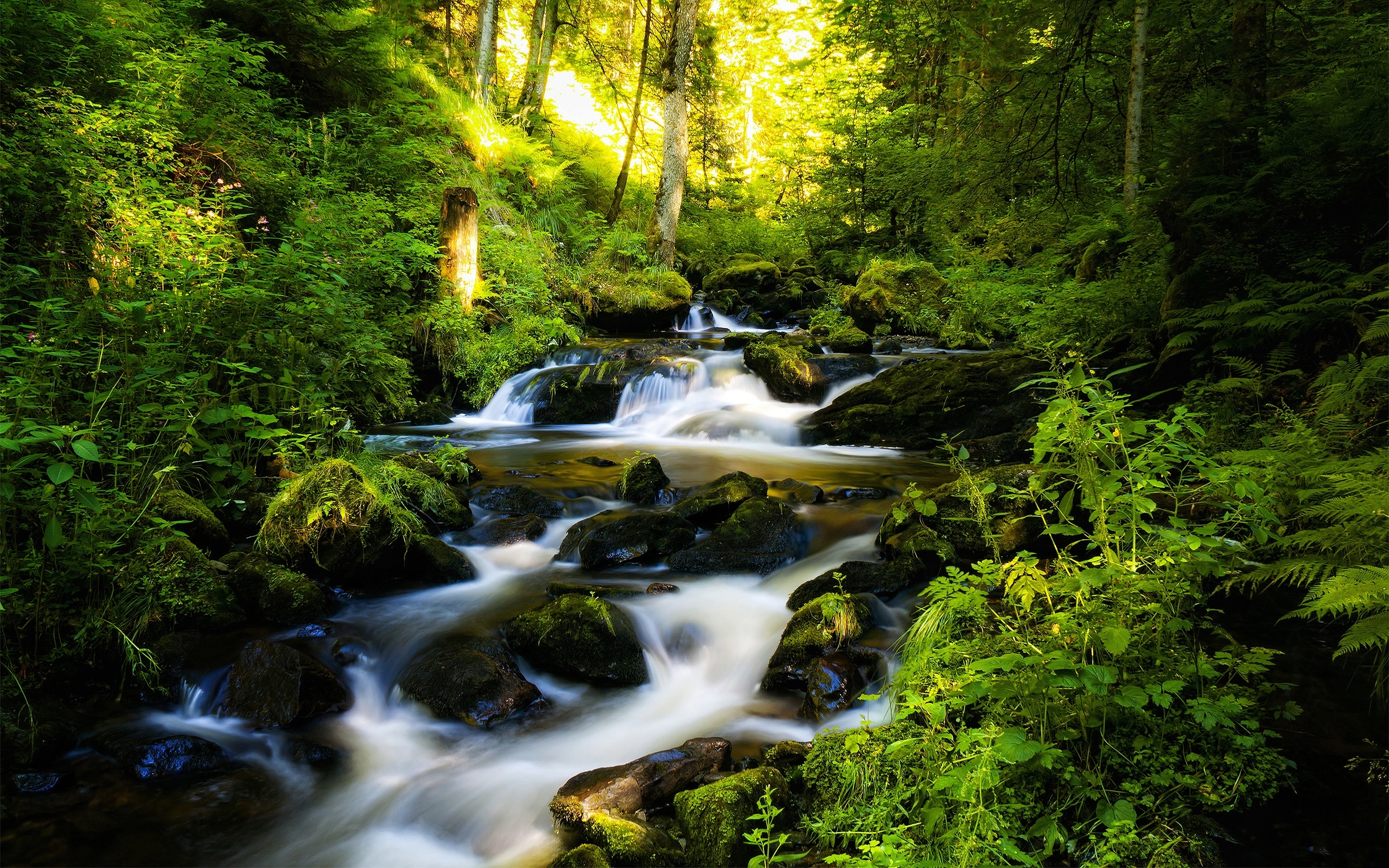 Forest Stream Backgrounds