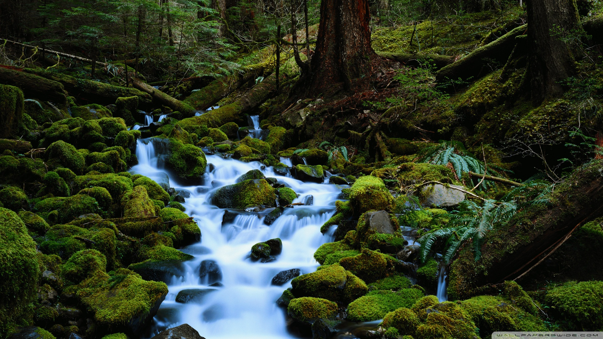 Forest Stream Pictures