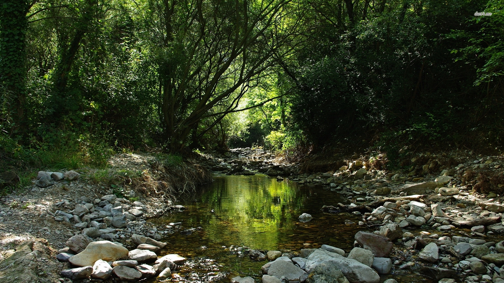 ... Forest stream wallpaper 1920x1080 ...