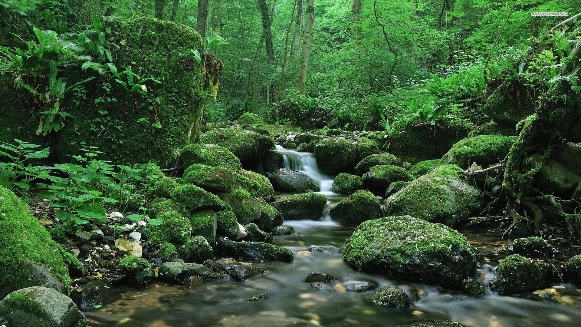Forest Stream Wallpaper