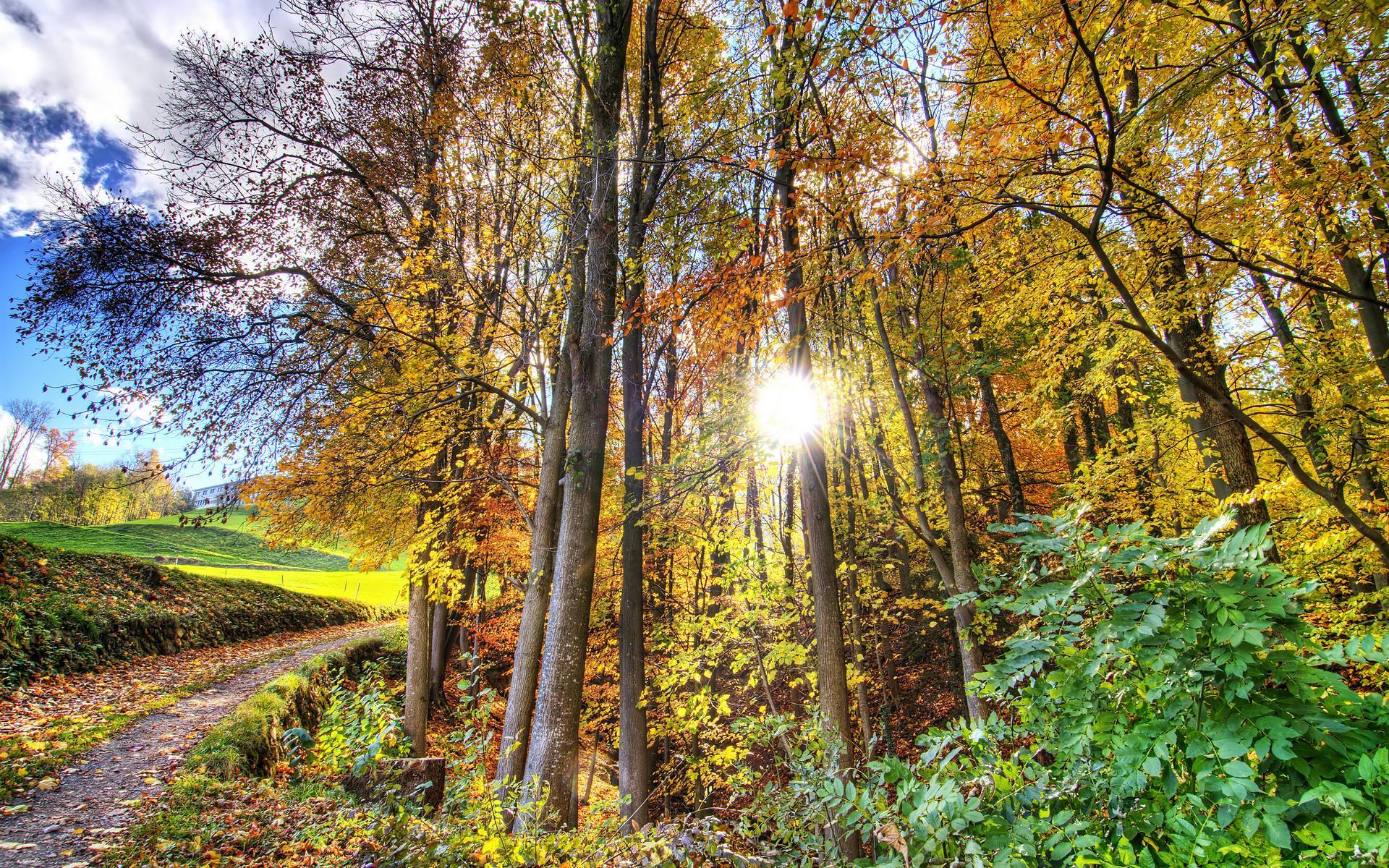 Forest Sun Wallpaper