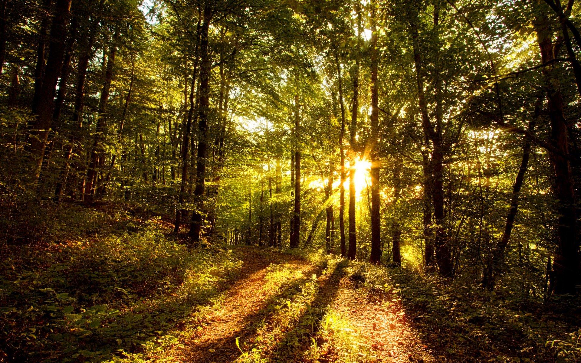 Forest Sun Wallpaper HD