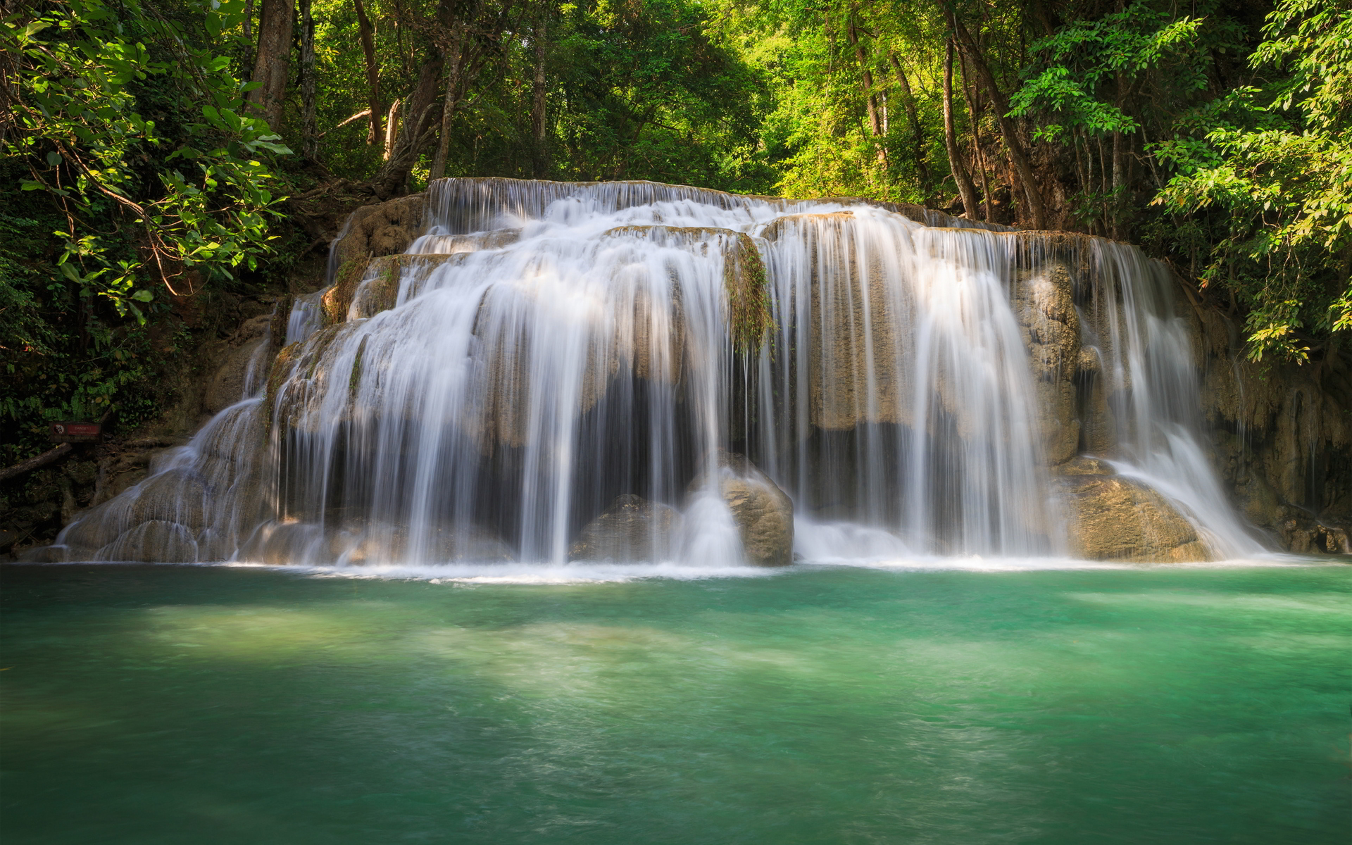 Forest trees waterfall