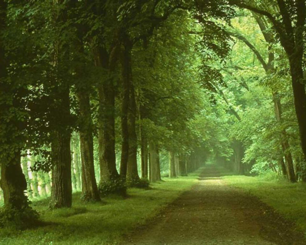 Green Green Forest Wallpaper