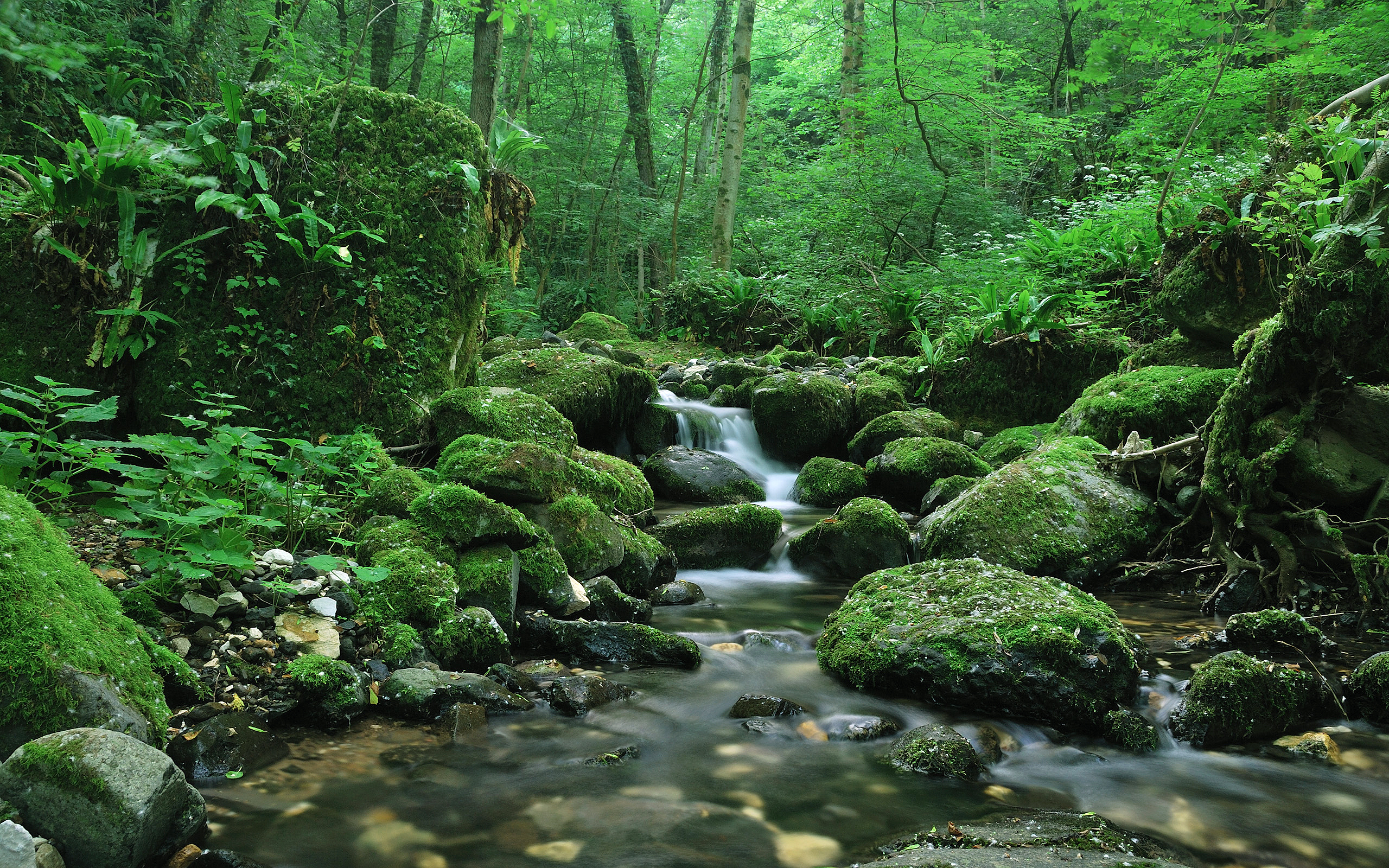 """Download the following Forest Waterfall Wallpaper 46618 by clicking the orange button positioned underneath the """"Download Wallpaper"""" section."""