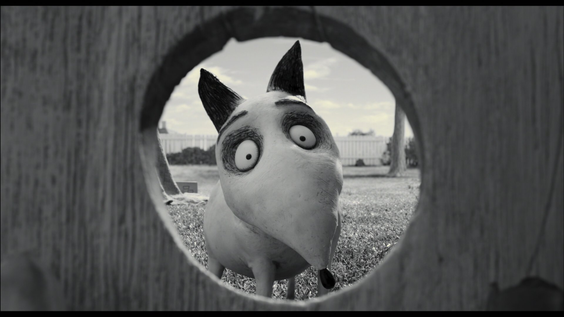 Frankenweenie Dog Sparky Wallpaper 1920x1080 9269