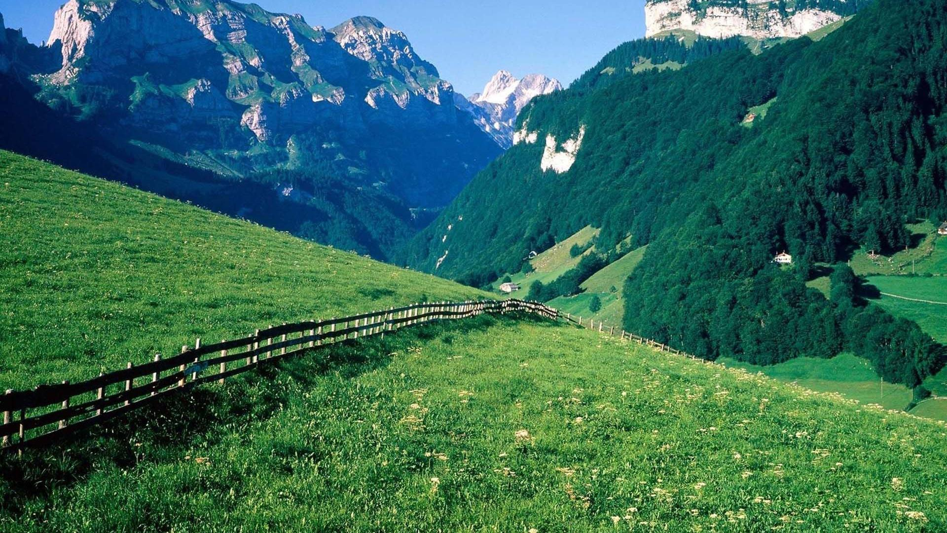 Hd Wonderful Swiss Alps Meadow Wallpaper Download Free