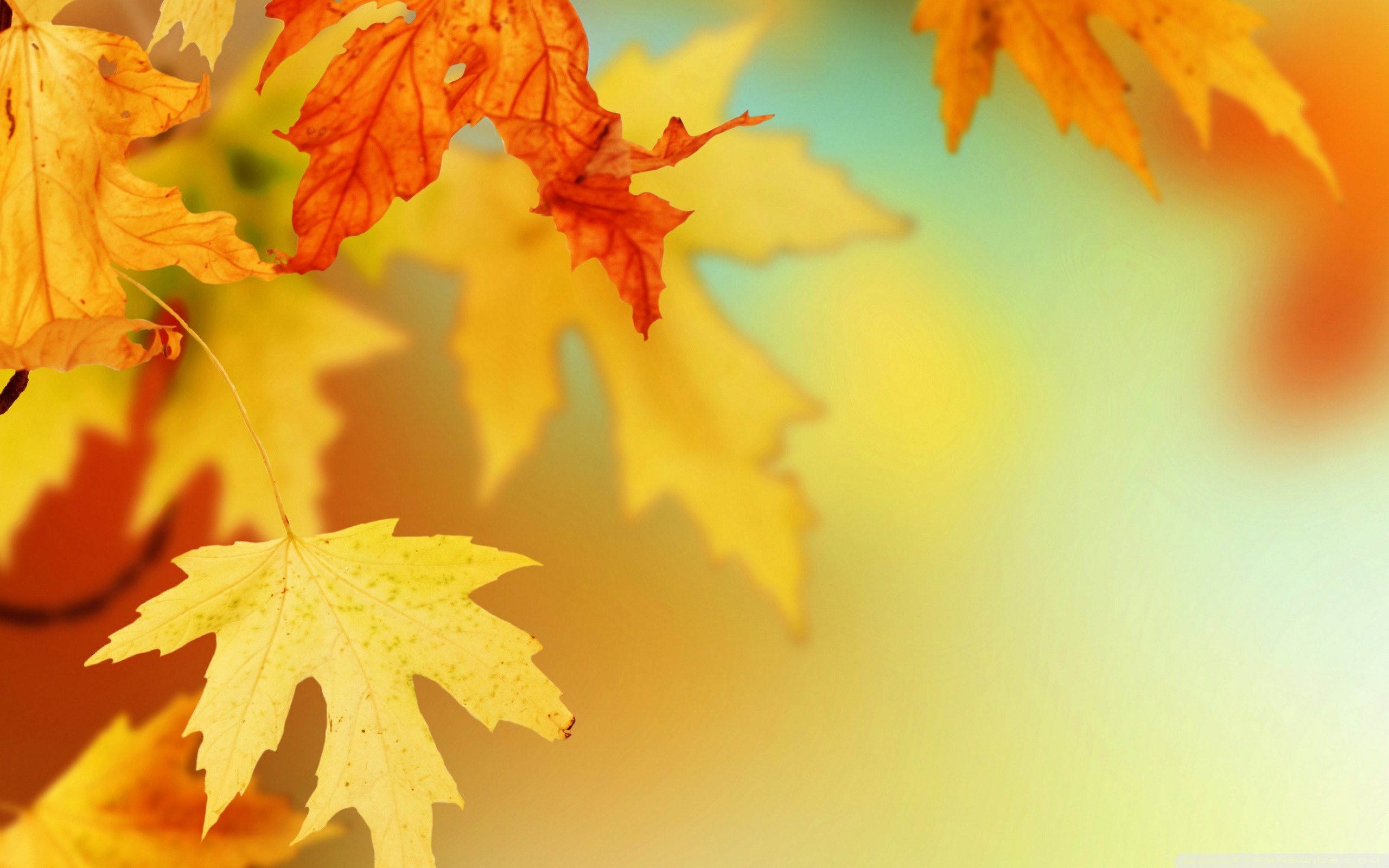 Free Desktop Wallpaper Autumn Leaves: Free Autumn Leaves Wallpaper