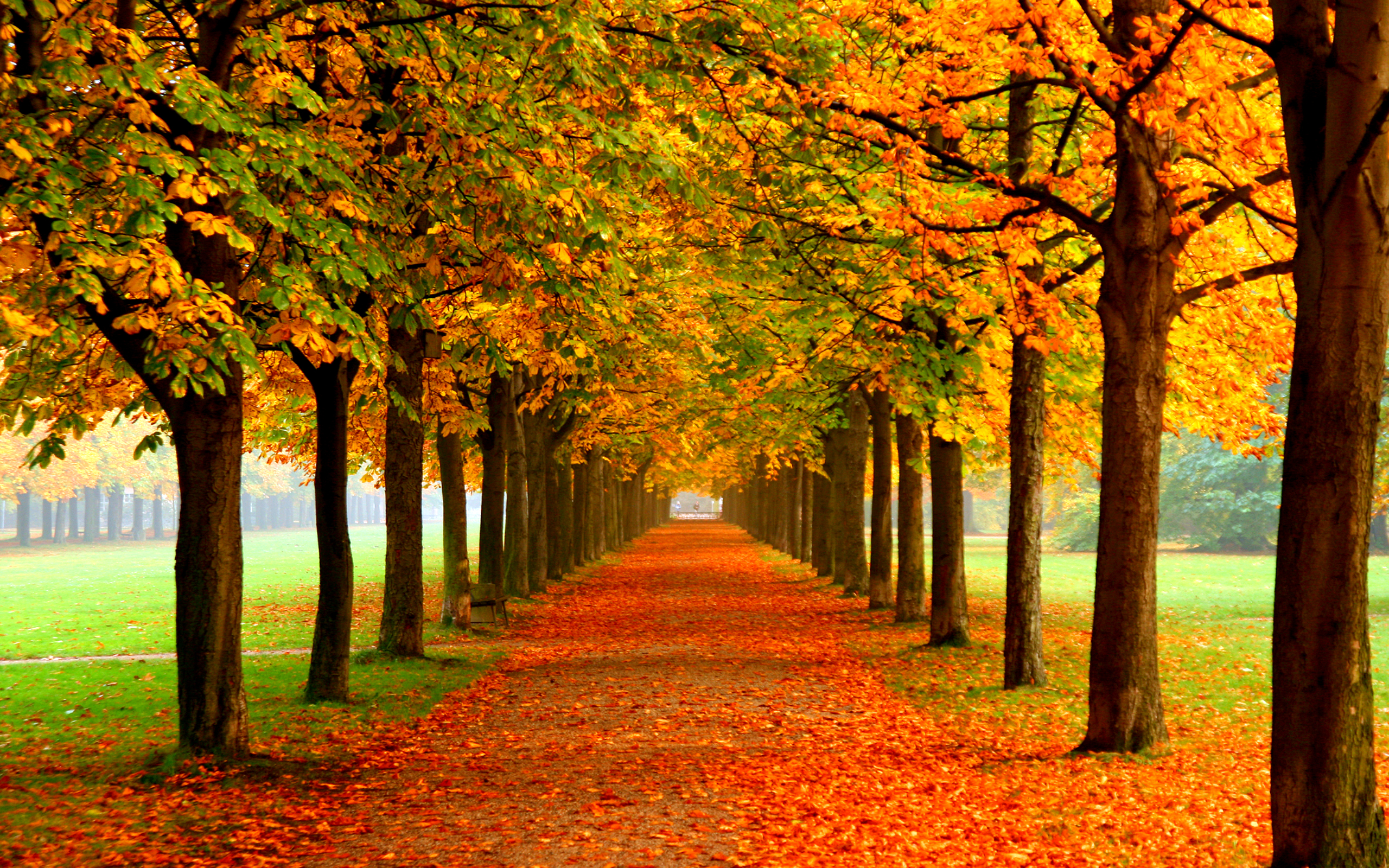 Free Autumn Wallpaper 2560x1600 70487