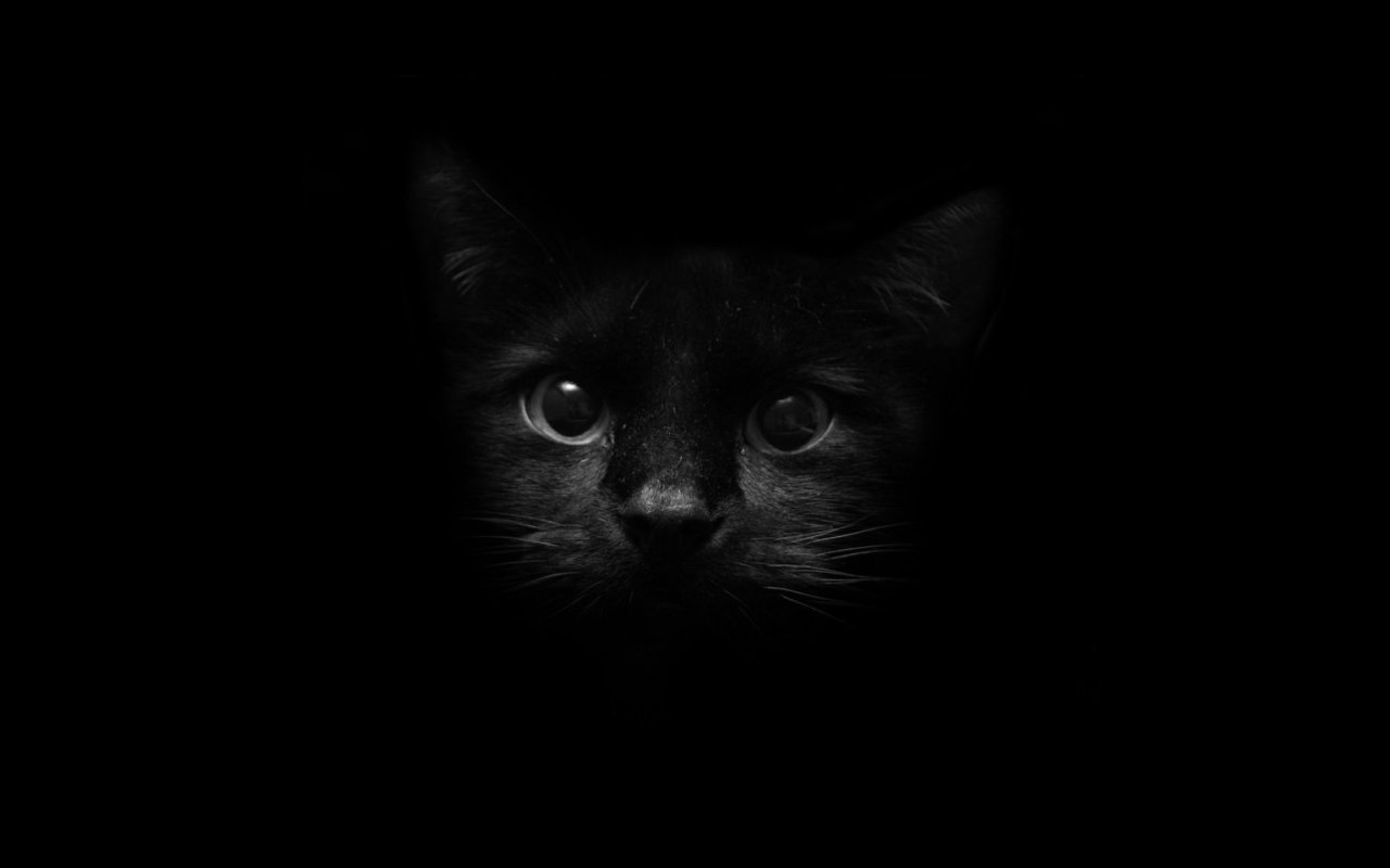 Free Black Cat Wallpaper