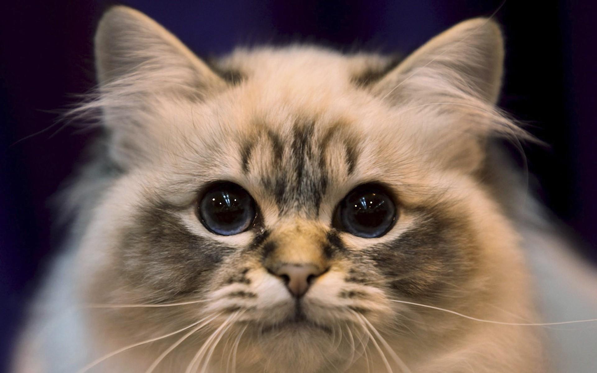 Download Close Up Cats Wallpaper Wallpoper