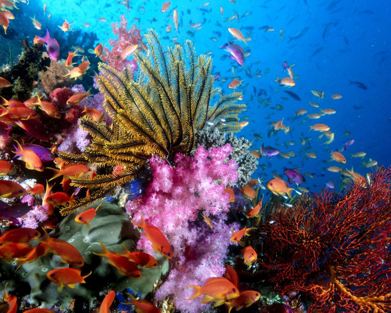 Free Coral Reef Wallpaper